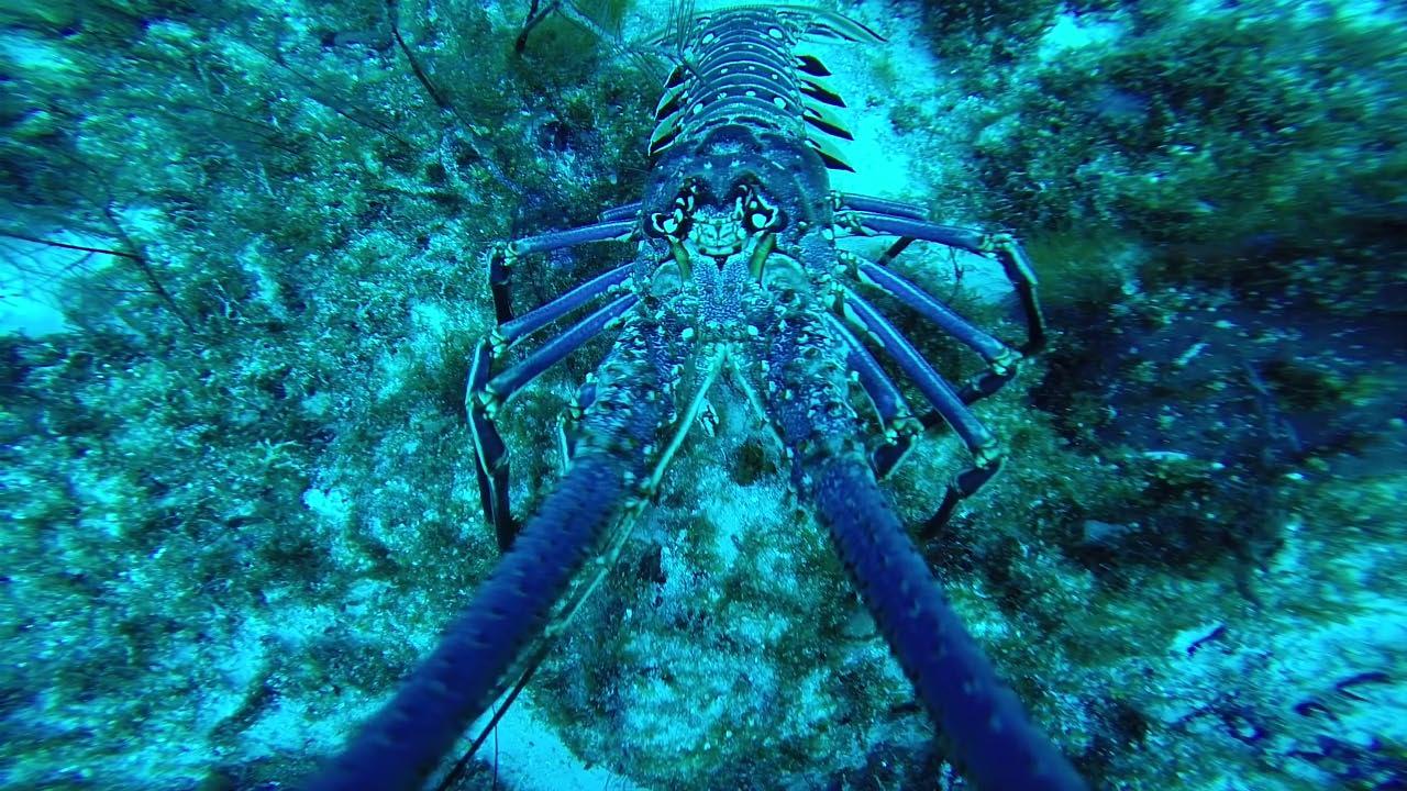 Lobster feels_edited-1.jpg