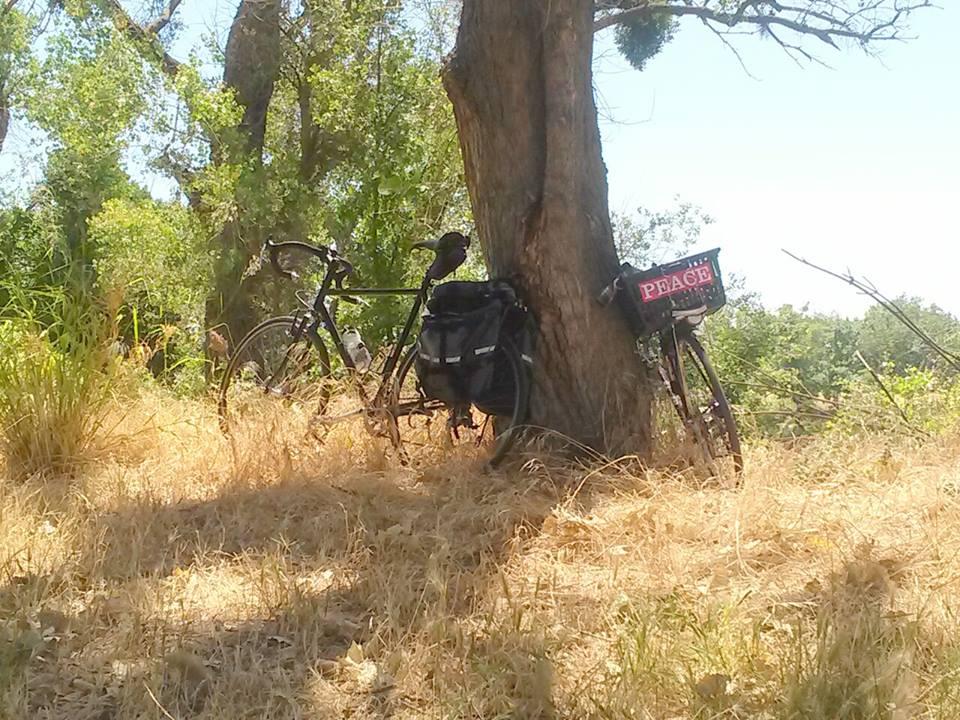 Bikes on a date while their humans enjoy a picnic at Camp Pollock, Sacramento, CA