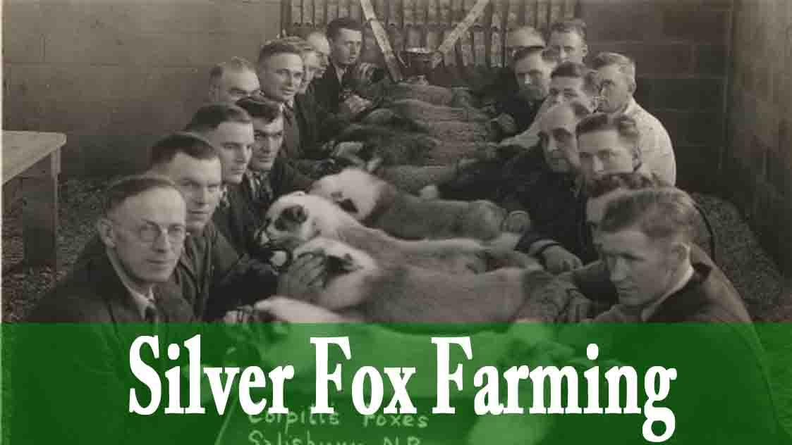 fox Farming.jpg