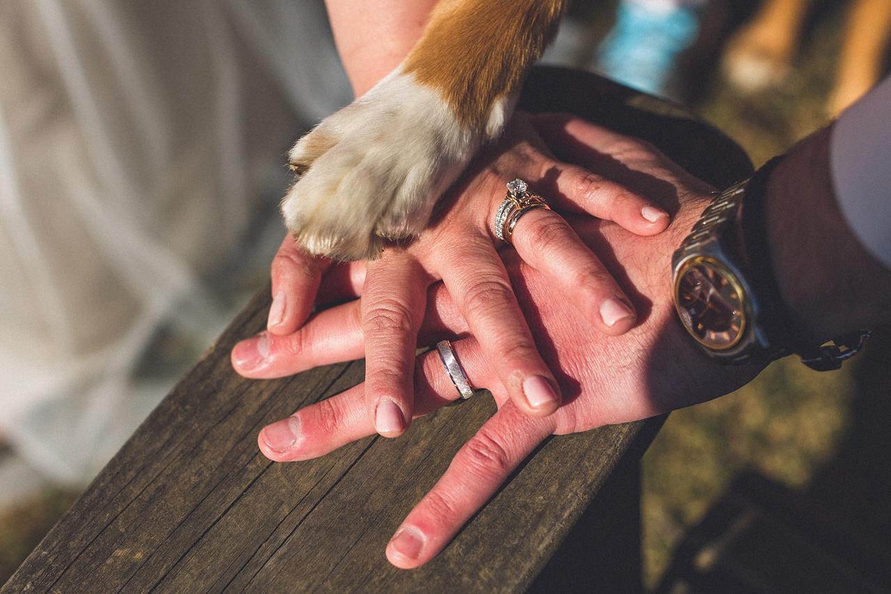 Hands Paw Wedding Photo
