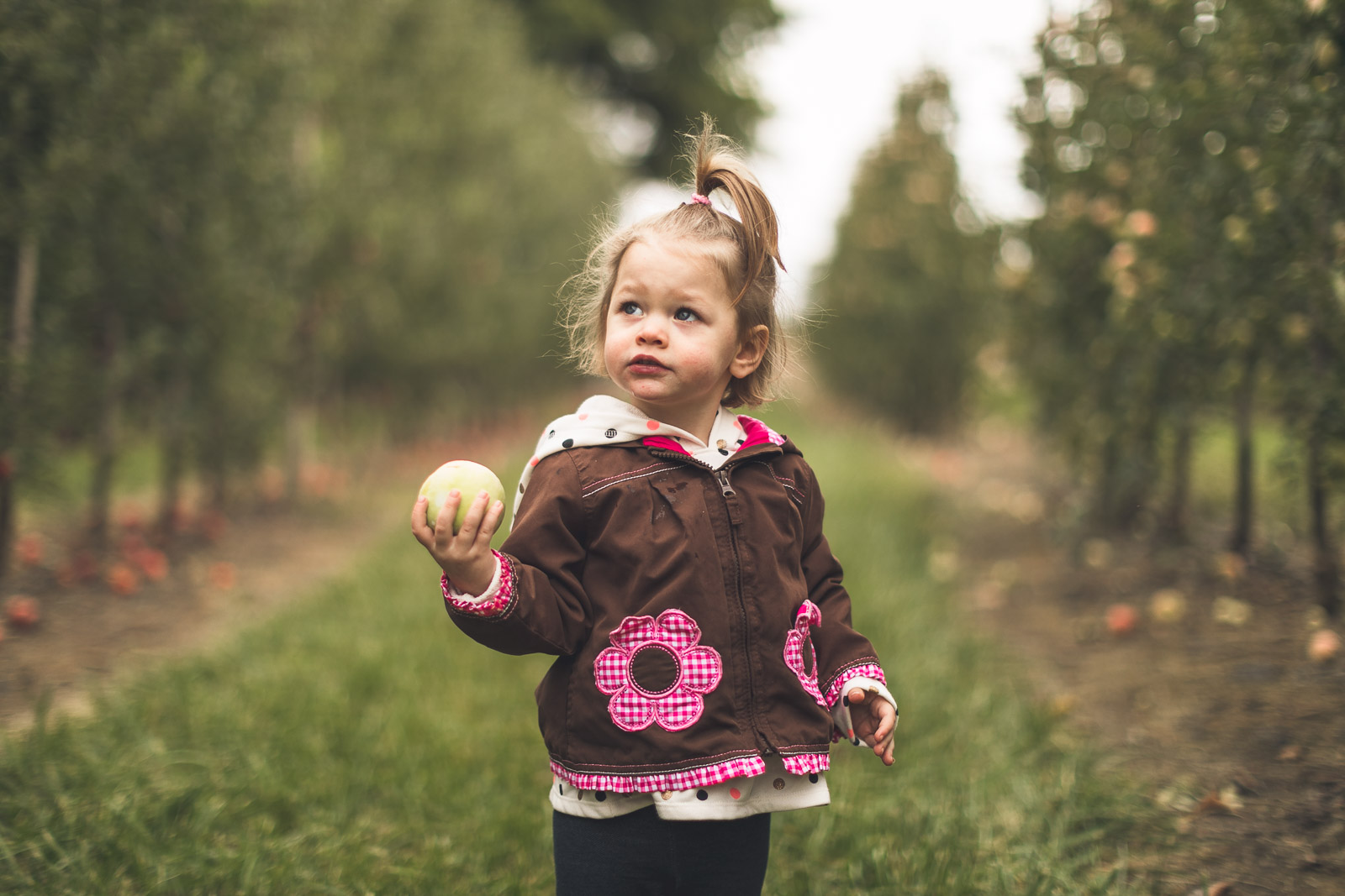 Apple Picking Children Photography New Jersey