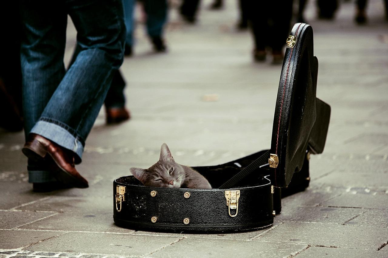kitty-491013_1280.jpg