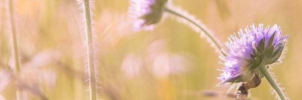 wildflowers-1406845_1280.jpg