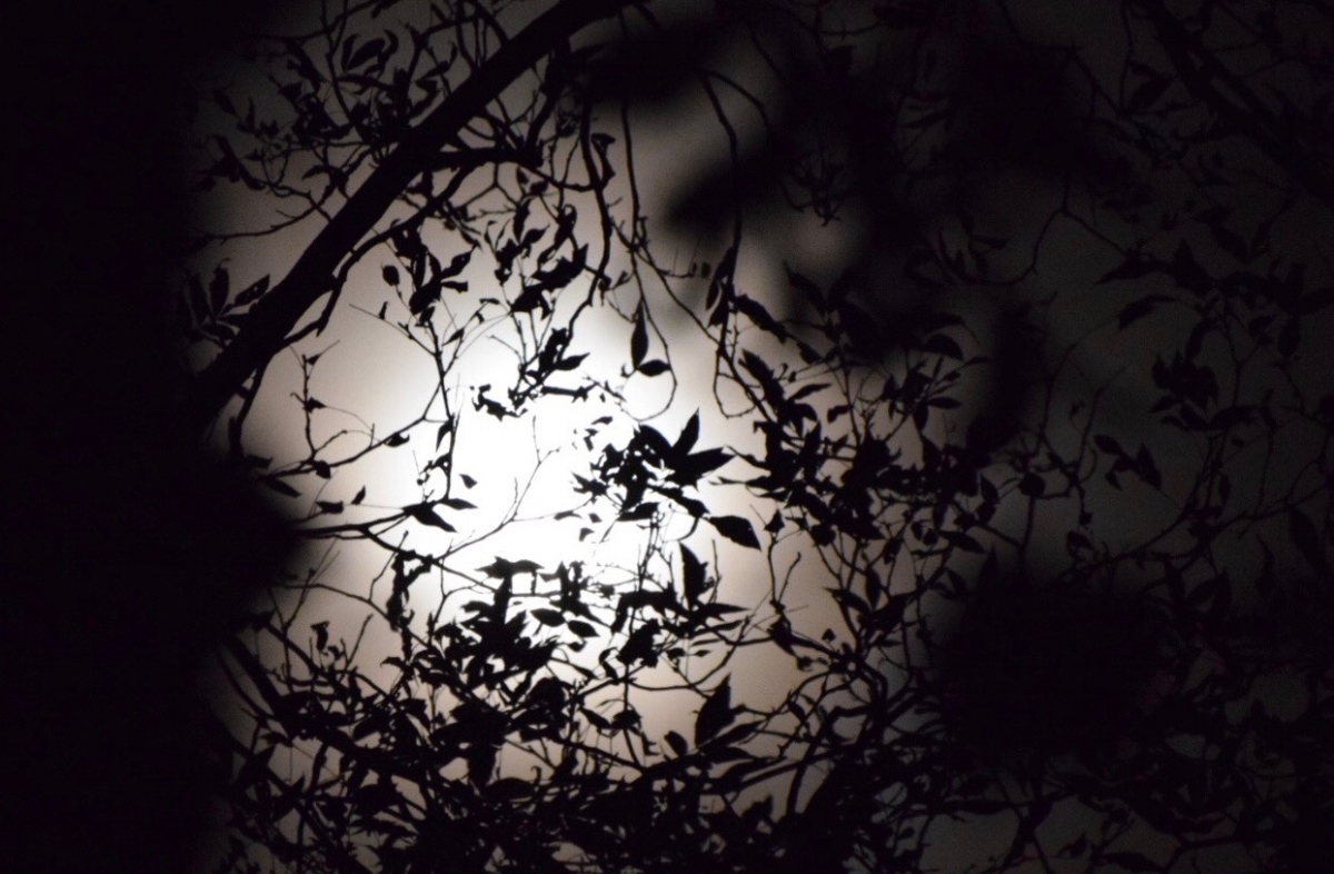 moon-through-the-trees-amanda-meder