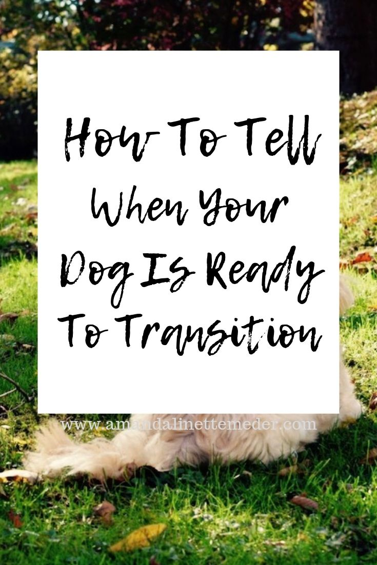 Crossing Over The Rainbow Bridge - How To Tell When Your Dog Is Ready To Transition