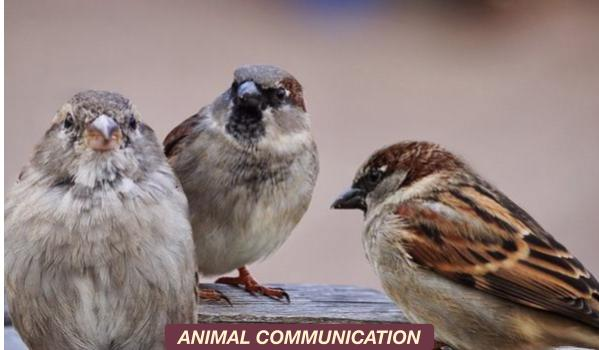 MEMBER_THEMES-ANIMALCOMMUNICATION.jpg