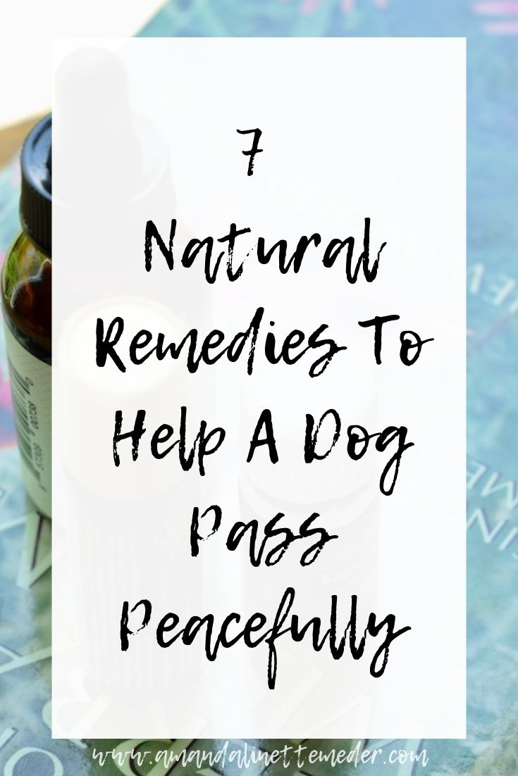 Article: Natural Remedies To Help A Dog Pass Peacefully