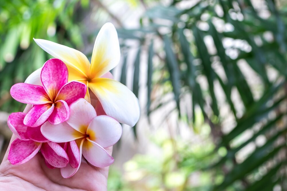 Photo of flowers with tropical foliage background by Artem Beliaikin from Pexels