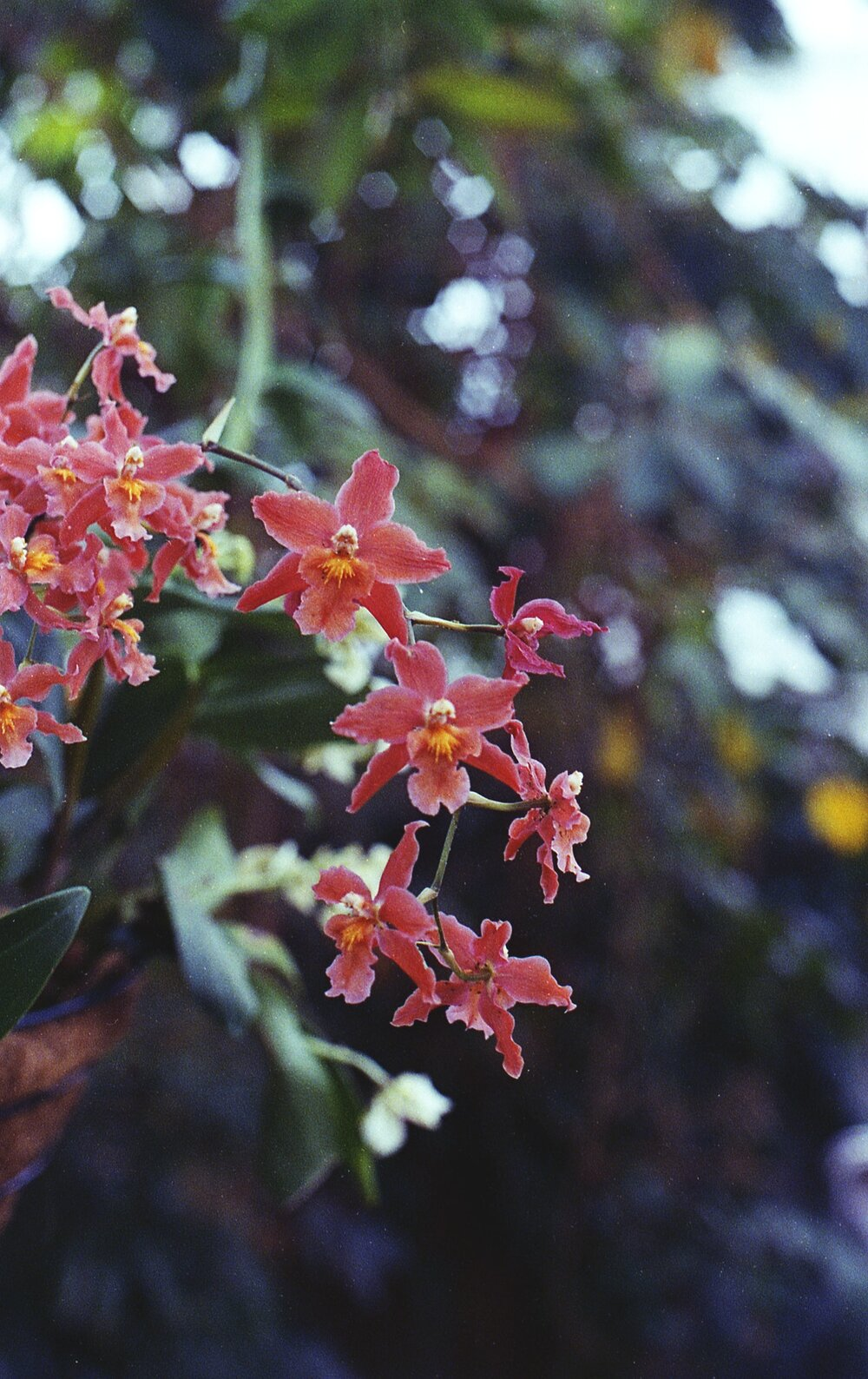 Photo of red orchids on a chain by Dred Geib from Pexels