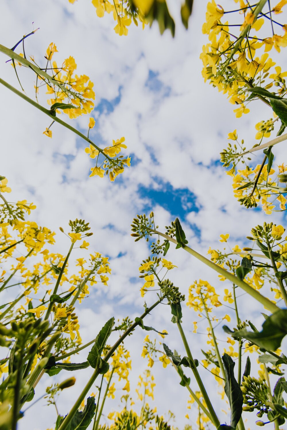 Photo of yellow flowers and sky above by Karolina Grabowska from Pexels
