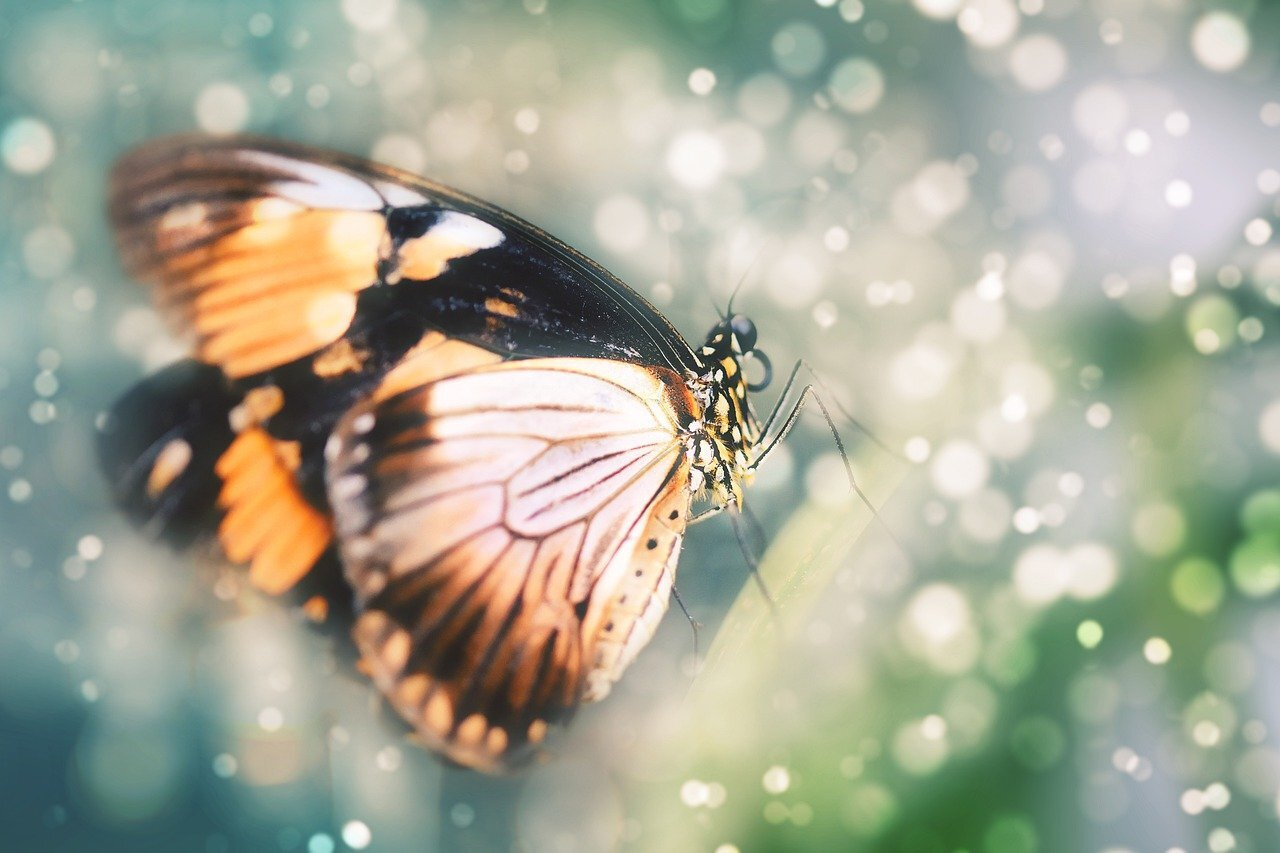 Photo of butterfly in bokeh light by Layers 从 Pixabay