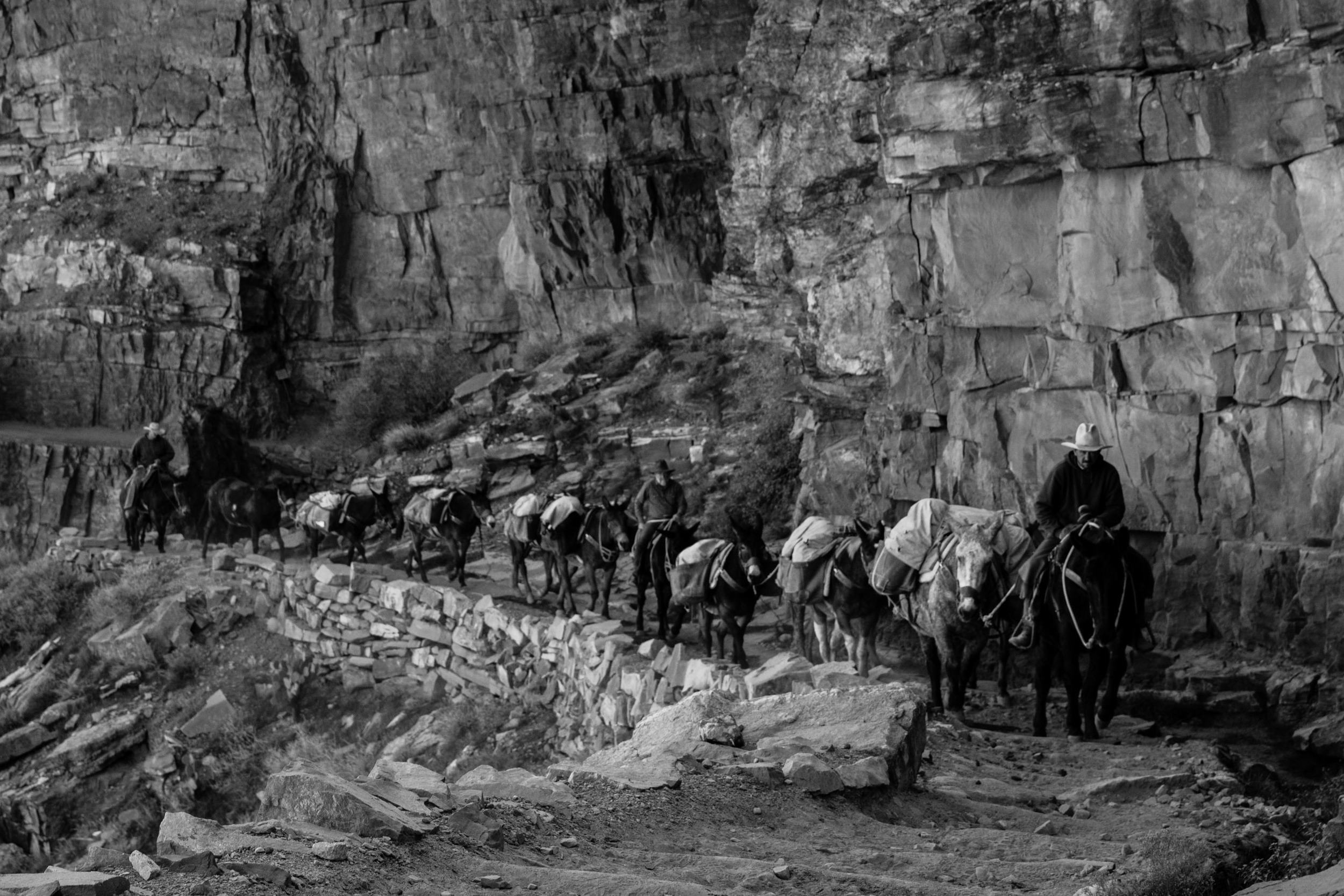 Mule train carrying supplies