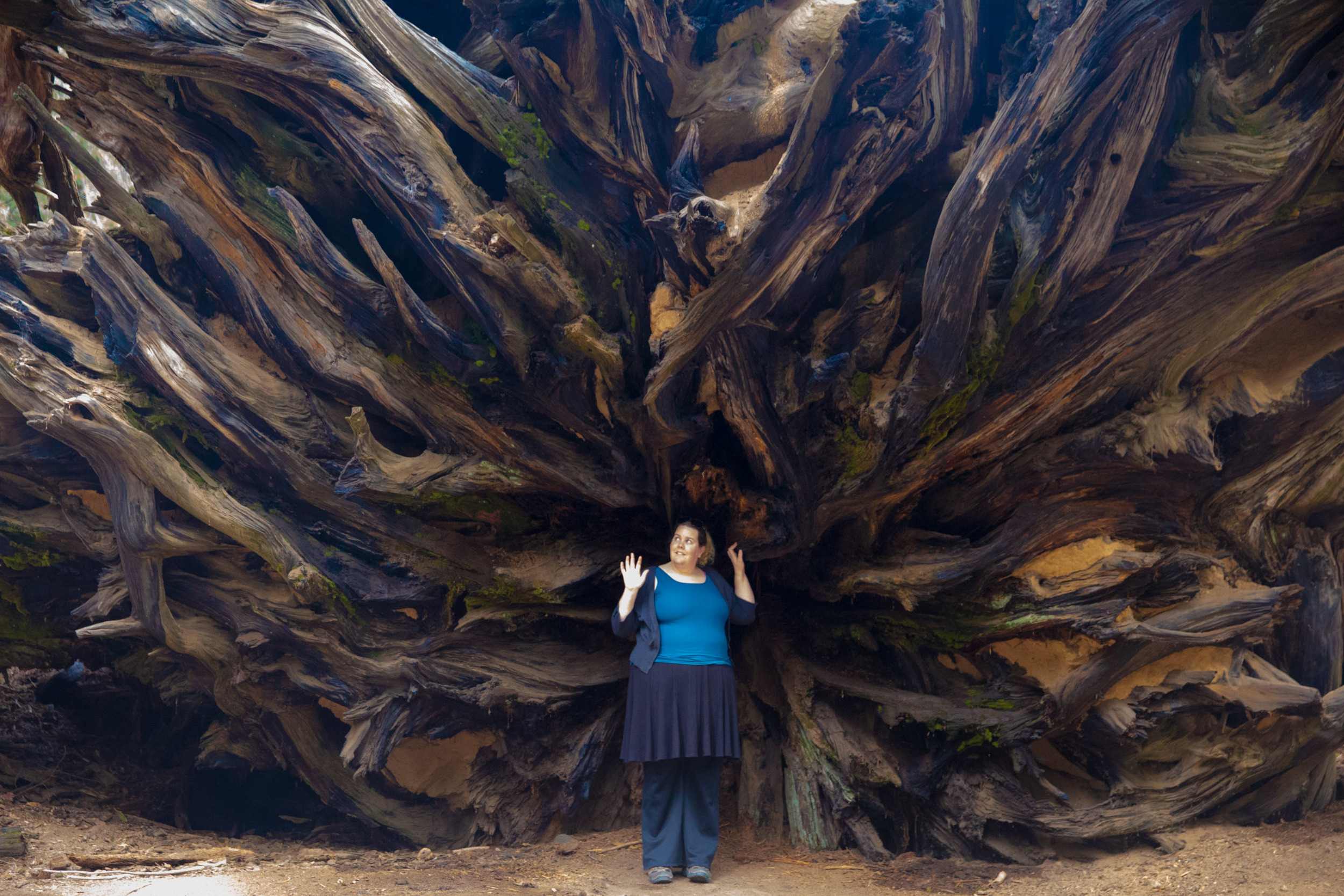 Shannan stands inside the root system of a fallen sequoia tree. The root system is very shallow compared to their size and Sequoias are known to have fallen oven in a gentle breeze. This particular tree fell in the 1950's and doesn't show much inclination to decompose anytime soon.