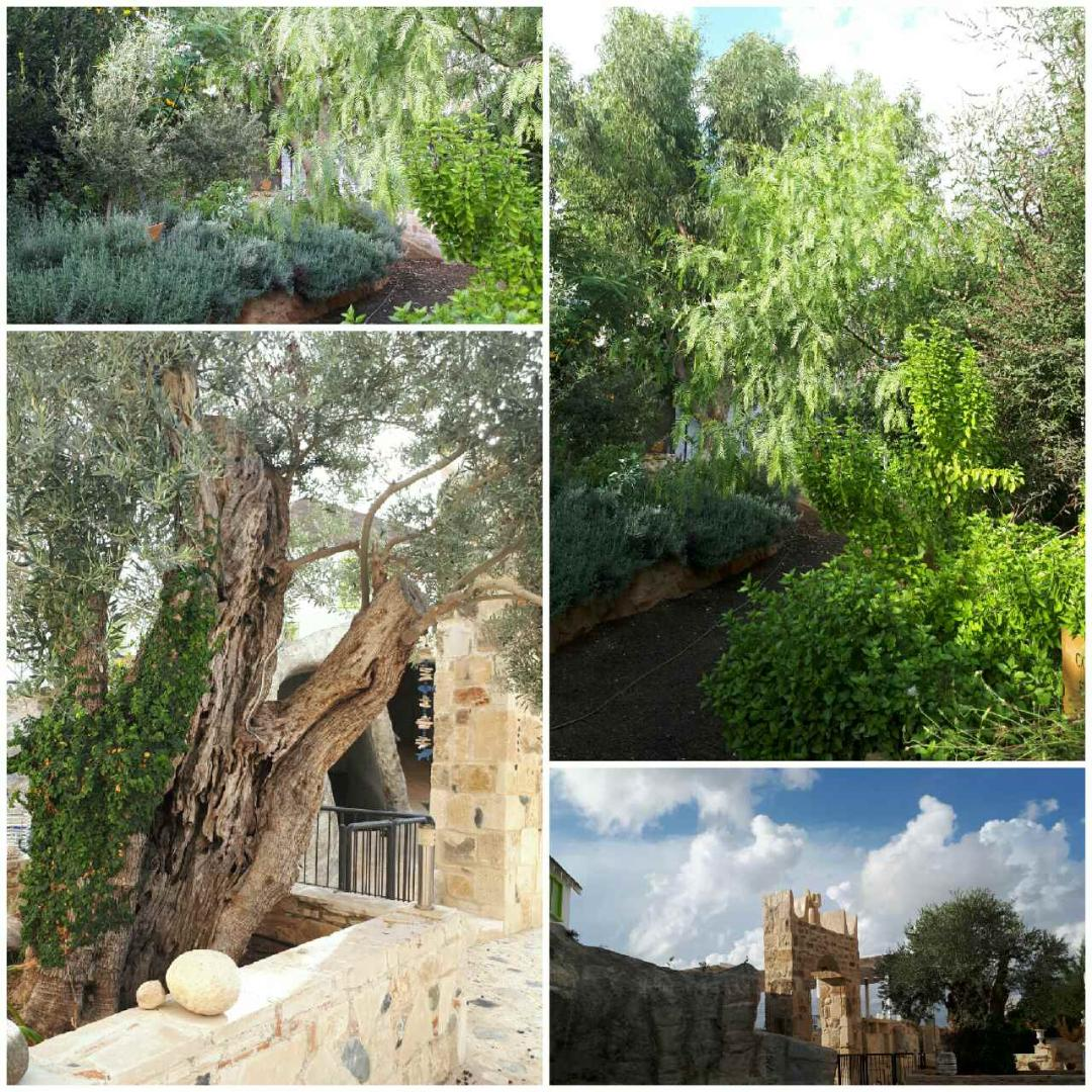 The Cyprus Medicinal Flora Garden Museum is a unique museum in Cyprus. It aims to provide information about several plants of Cyprus flora that has been used for ages for healing purposes, particularily for mental health problems.