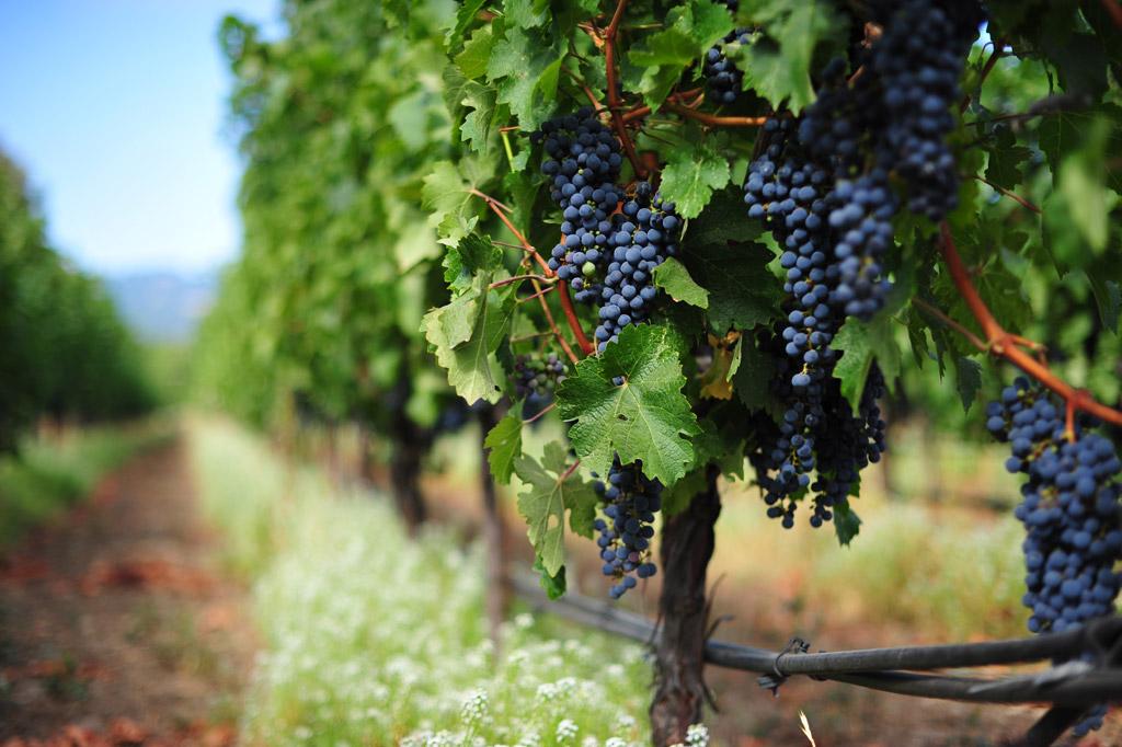 vineyard-main.jpg
