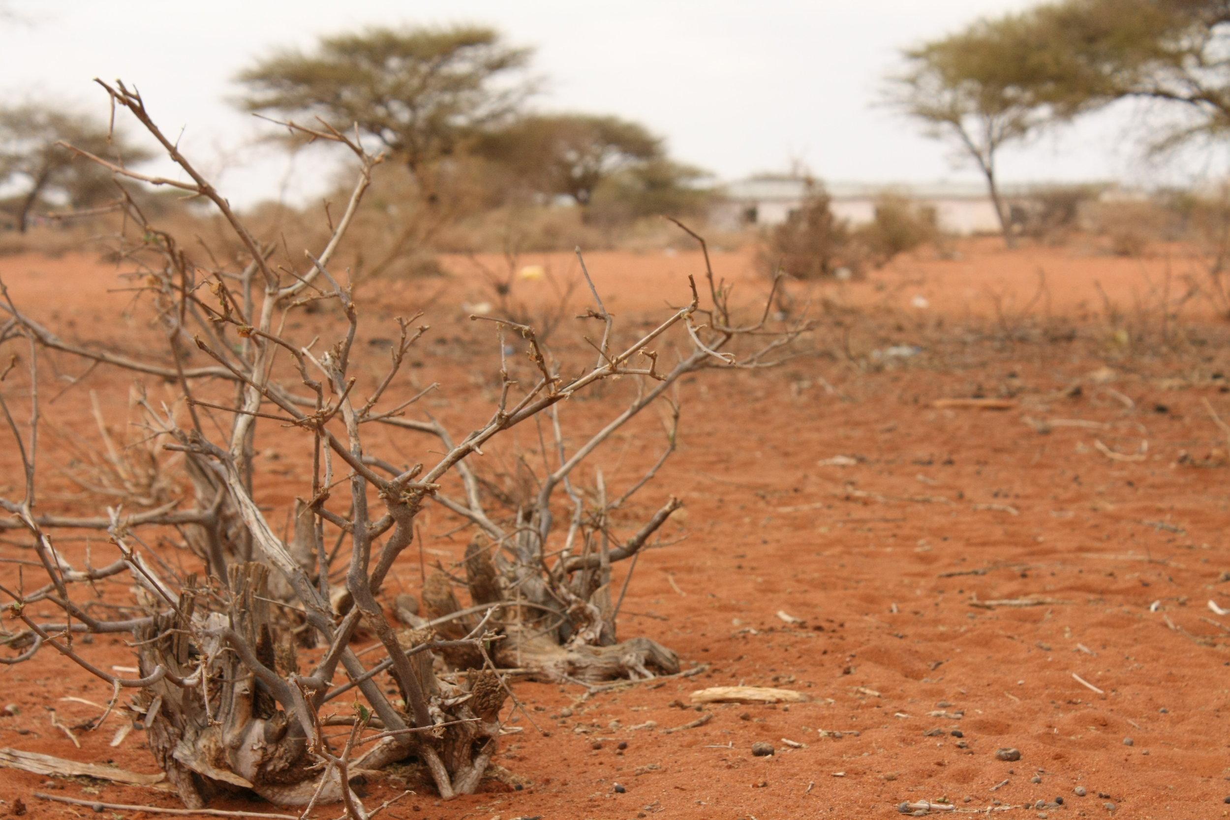 Oxfam_East_Africa_-_The_barren_landscape_of_Kulaley_village.jpg