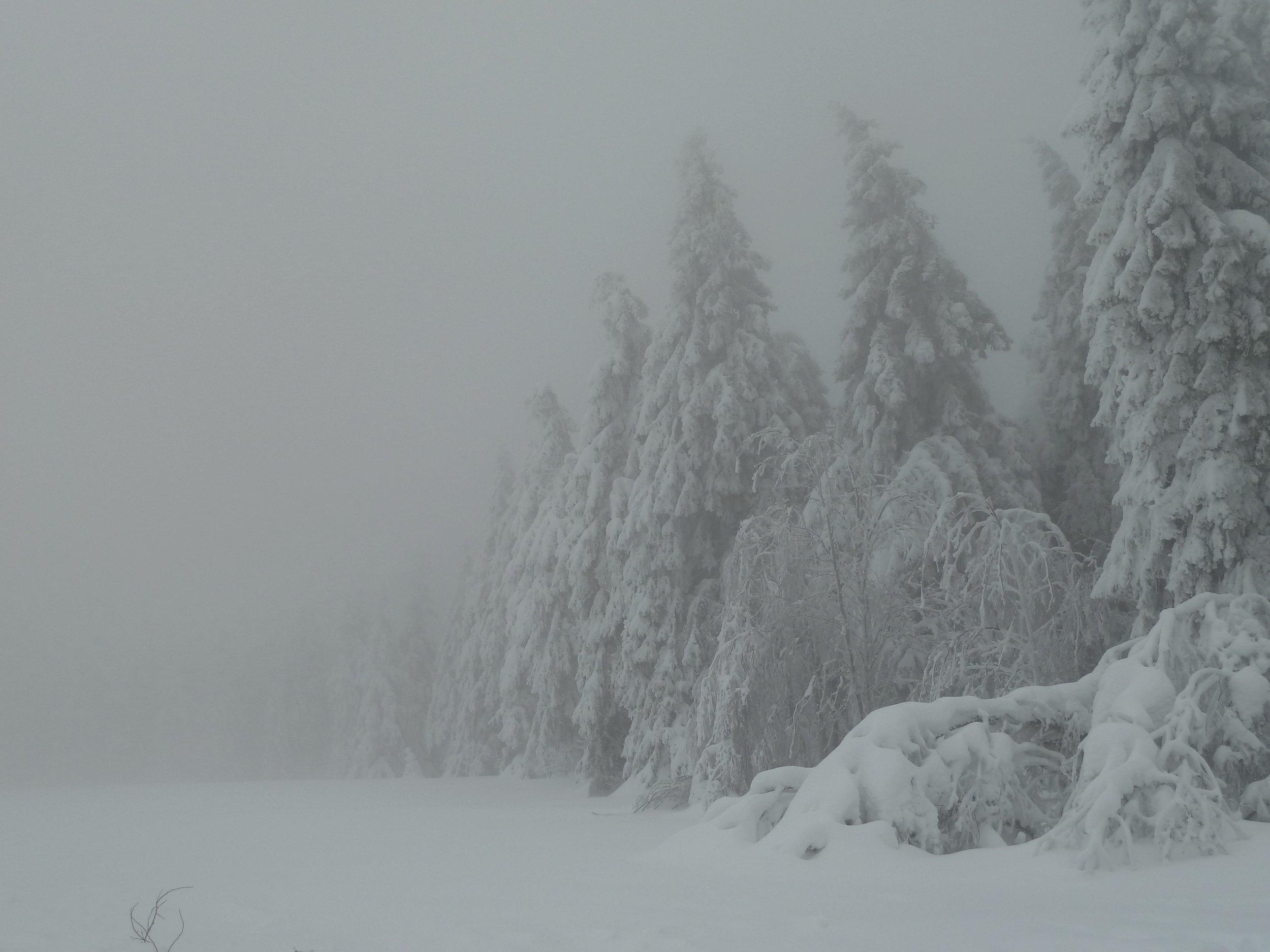 Harz Mountain Winter, 2012