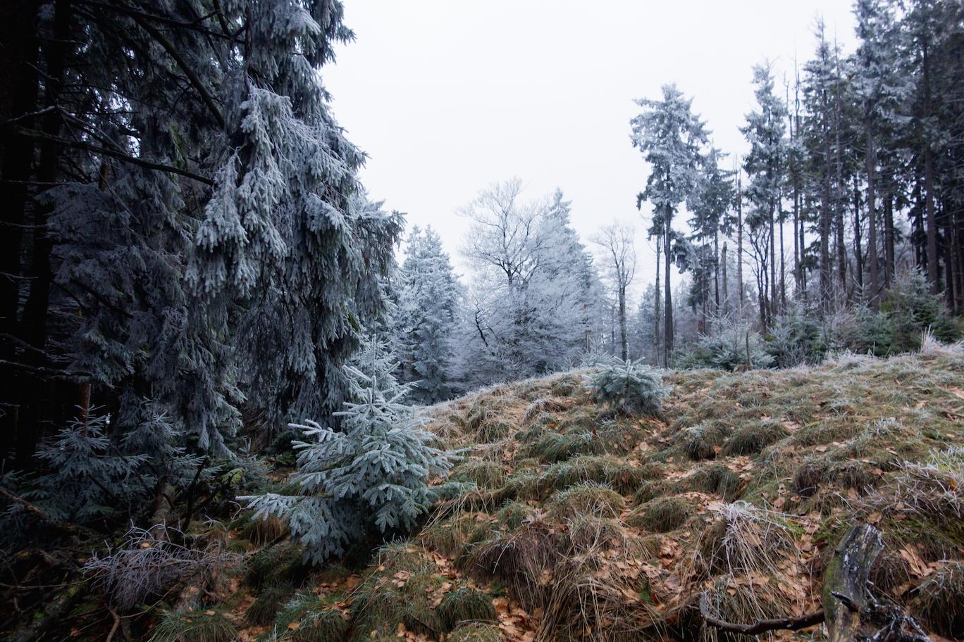 Taunus, early winter morning, 2018.