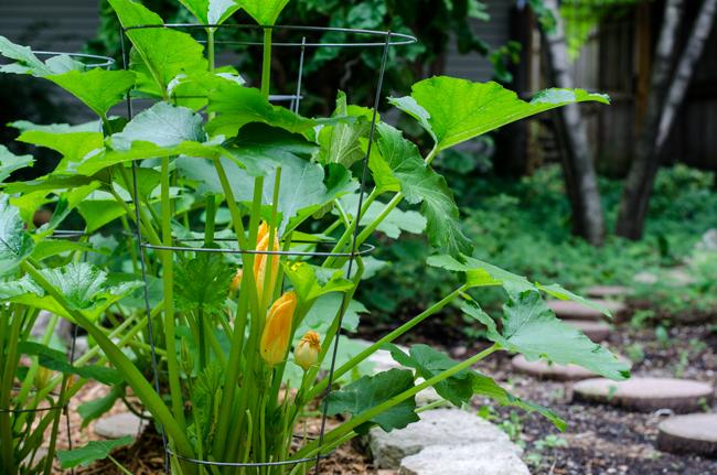 onthesamepageblog_squashflowers.jpg