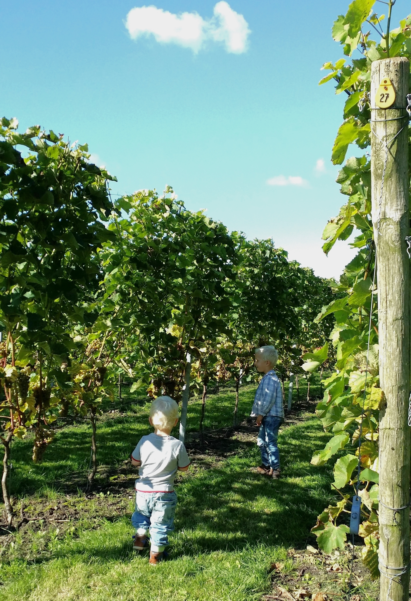 Saalhoff Vineyard, Wijnaard Saalhoff for kids