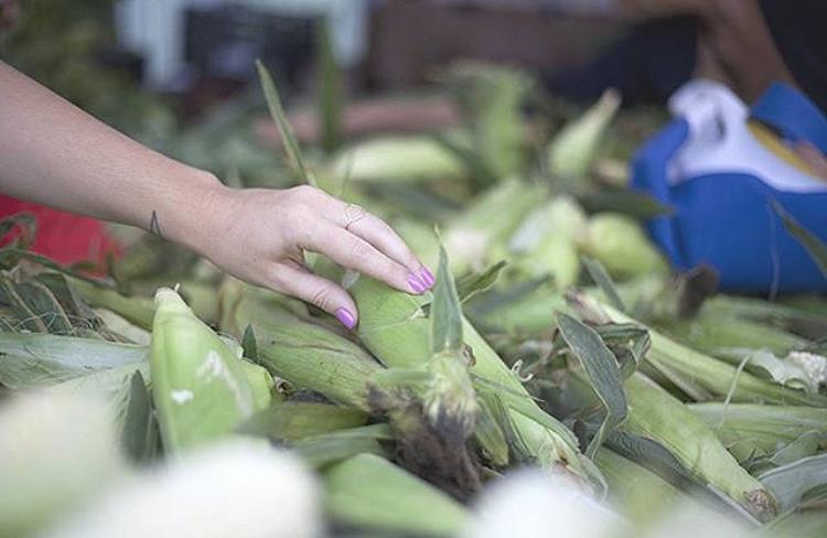 @hellosaratramp, Sara Tramp Ligoria Mar Vista Farmer's Market, LA