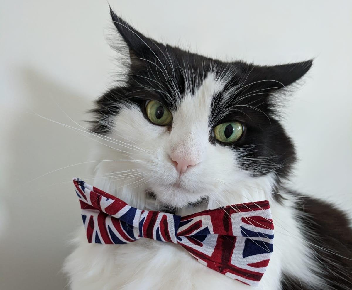 Bildergebnis für brexit cat