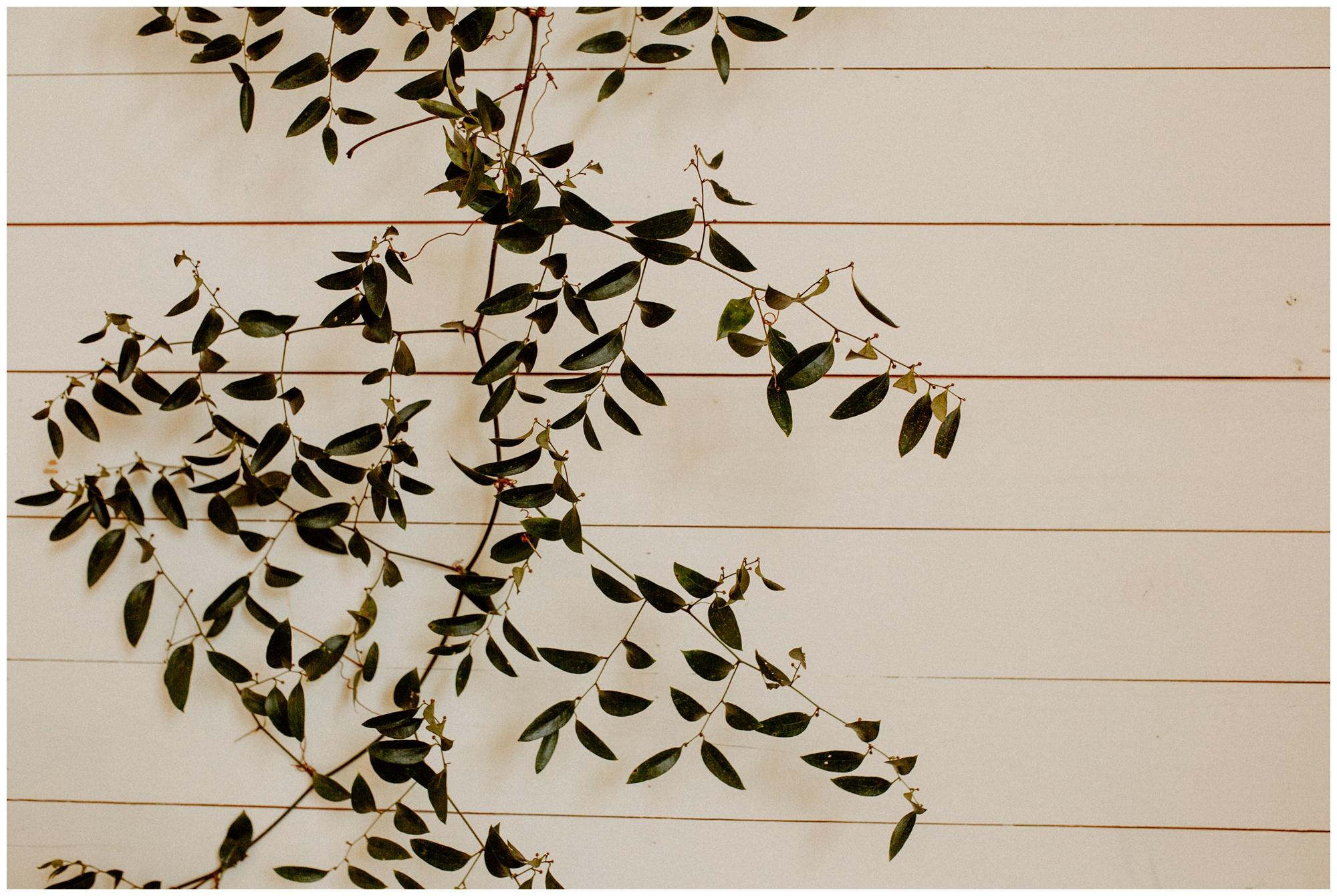 AUSTIN-TEXAS-PROSPECT-HOUSE-WEDDING-VENUE-PHOTOGRAPHY25871.JPG