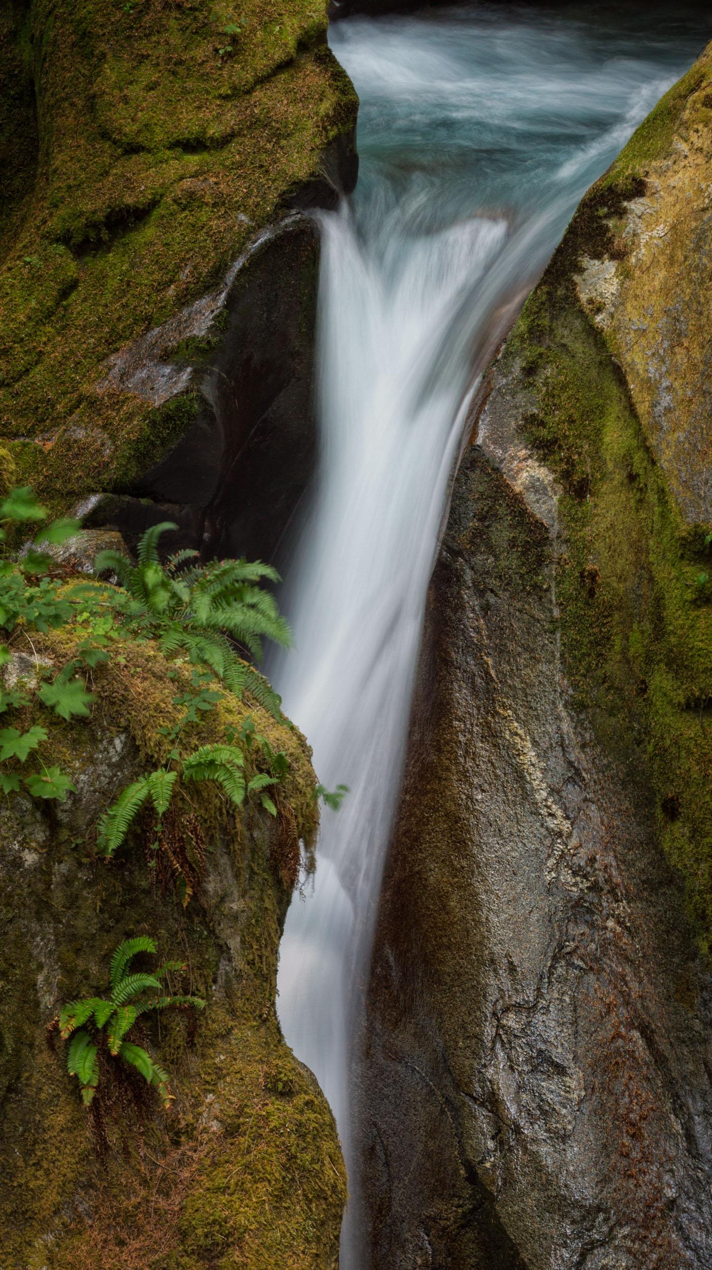Falls and Ferns