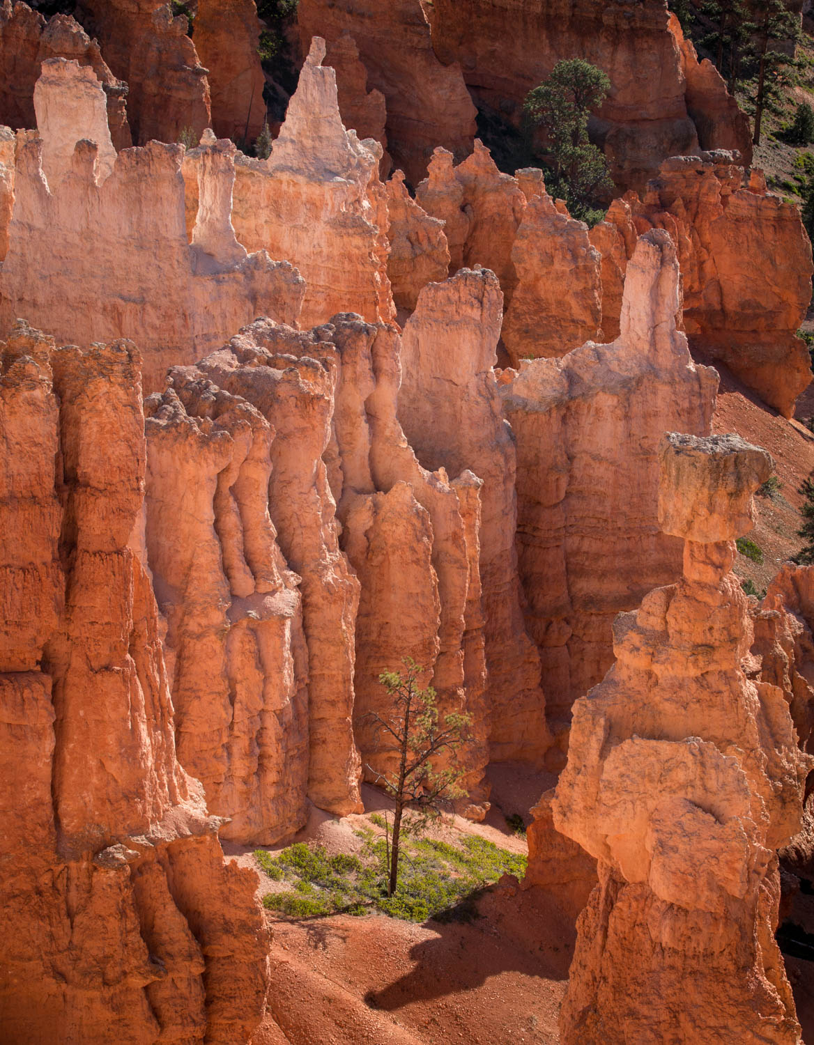 Hoodoos and tree.jpg