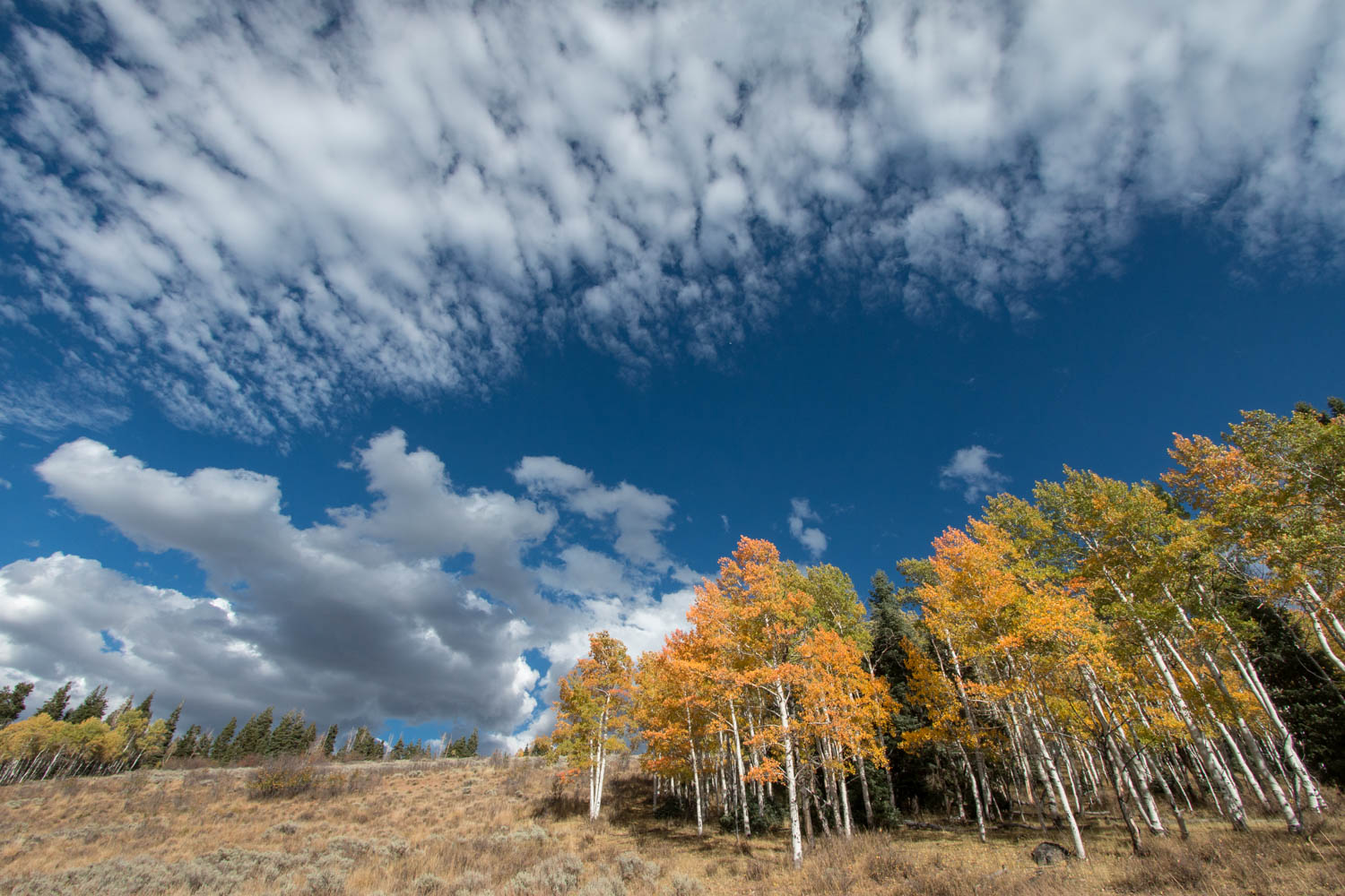 Aspen and clouds.jpg