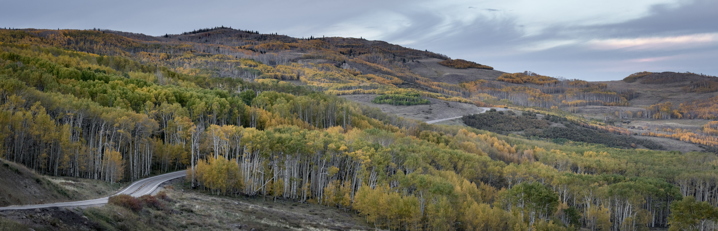 Aspen on Utah 12 (Click on image to enlarge)