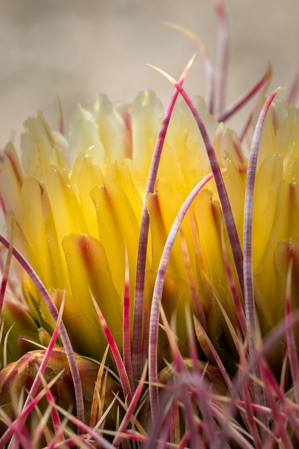 Spines and Blossom