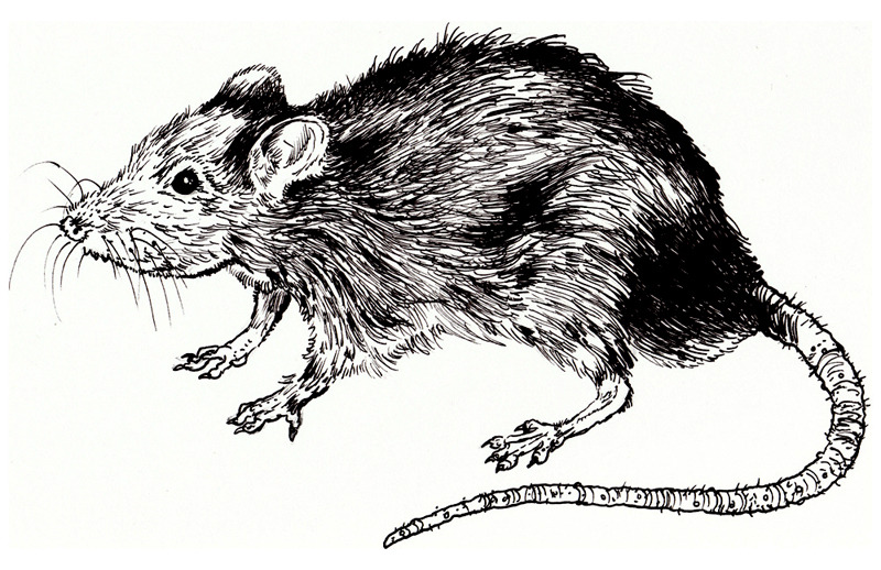 TERA MELOS: Rat King (tee design)