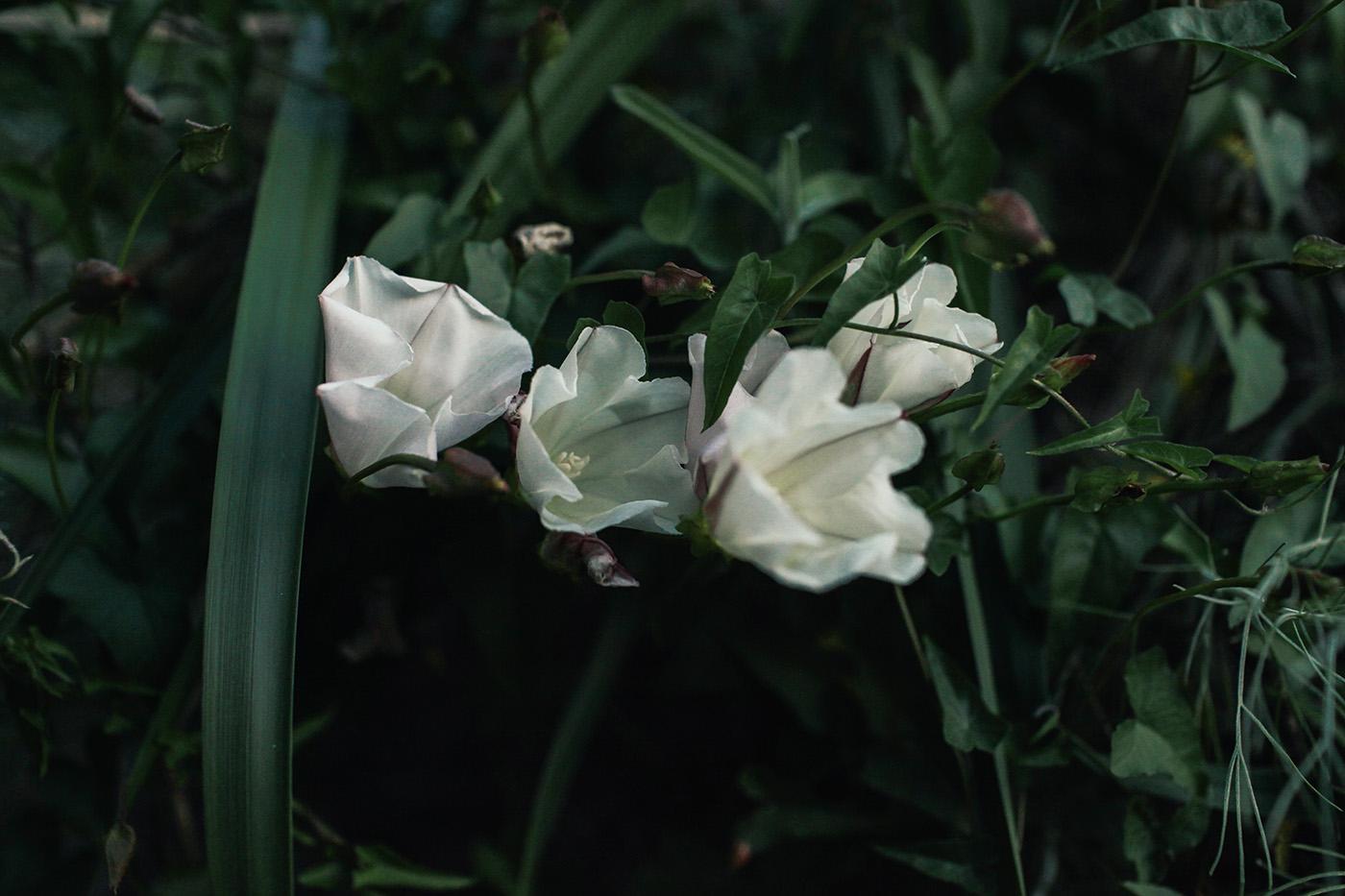 anna-zajac-11.jpg