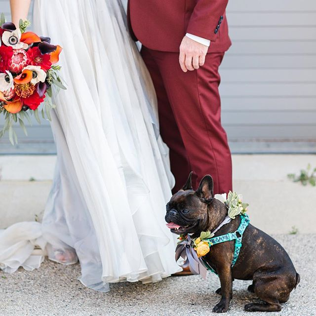 More weddings with dogs in 2019 please 💕
