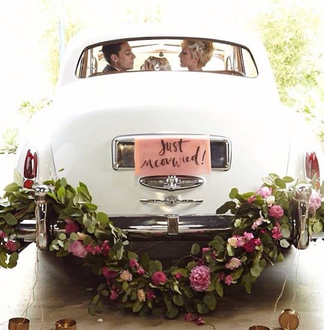 Rolls Royce Silver Cloud's are purrrrrrrfect, so are the kittens. #petweddingservice #winterwedding #kentishwedding #kentbride #kentwedding #weddingblog #weddingideas #weddingcarskent
