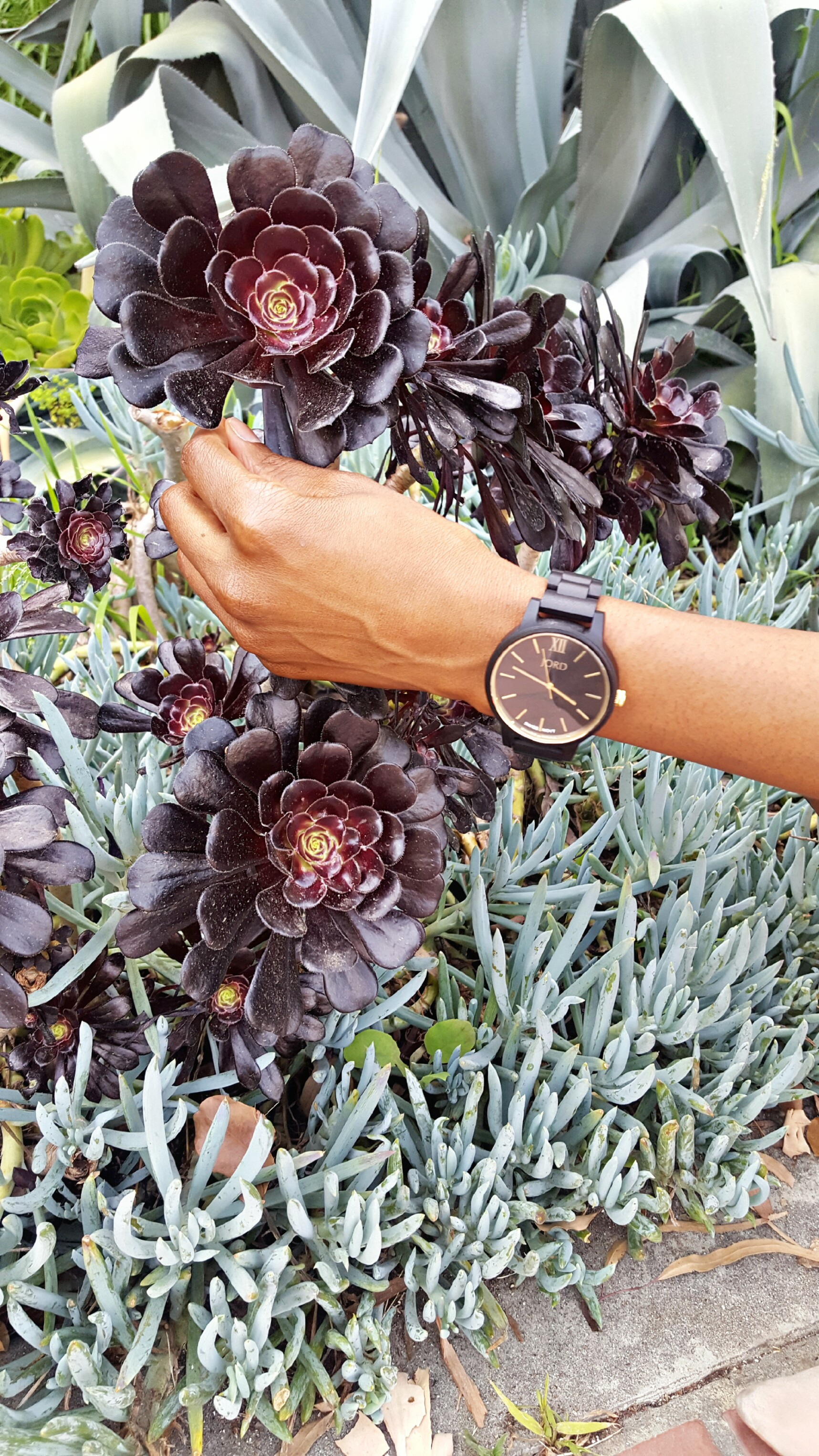 jord-ebony-and-gold-watch.jpg