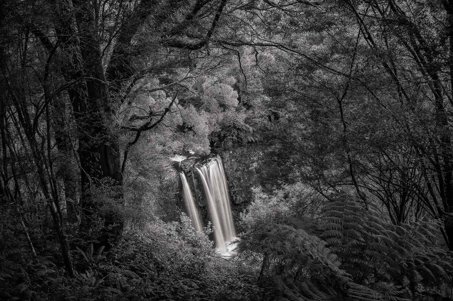 Lookout, Erskine Falls, Great Otway National Park   Leica M9 camera and Leica Summicron 35mm  f 2 lens.