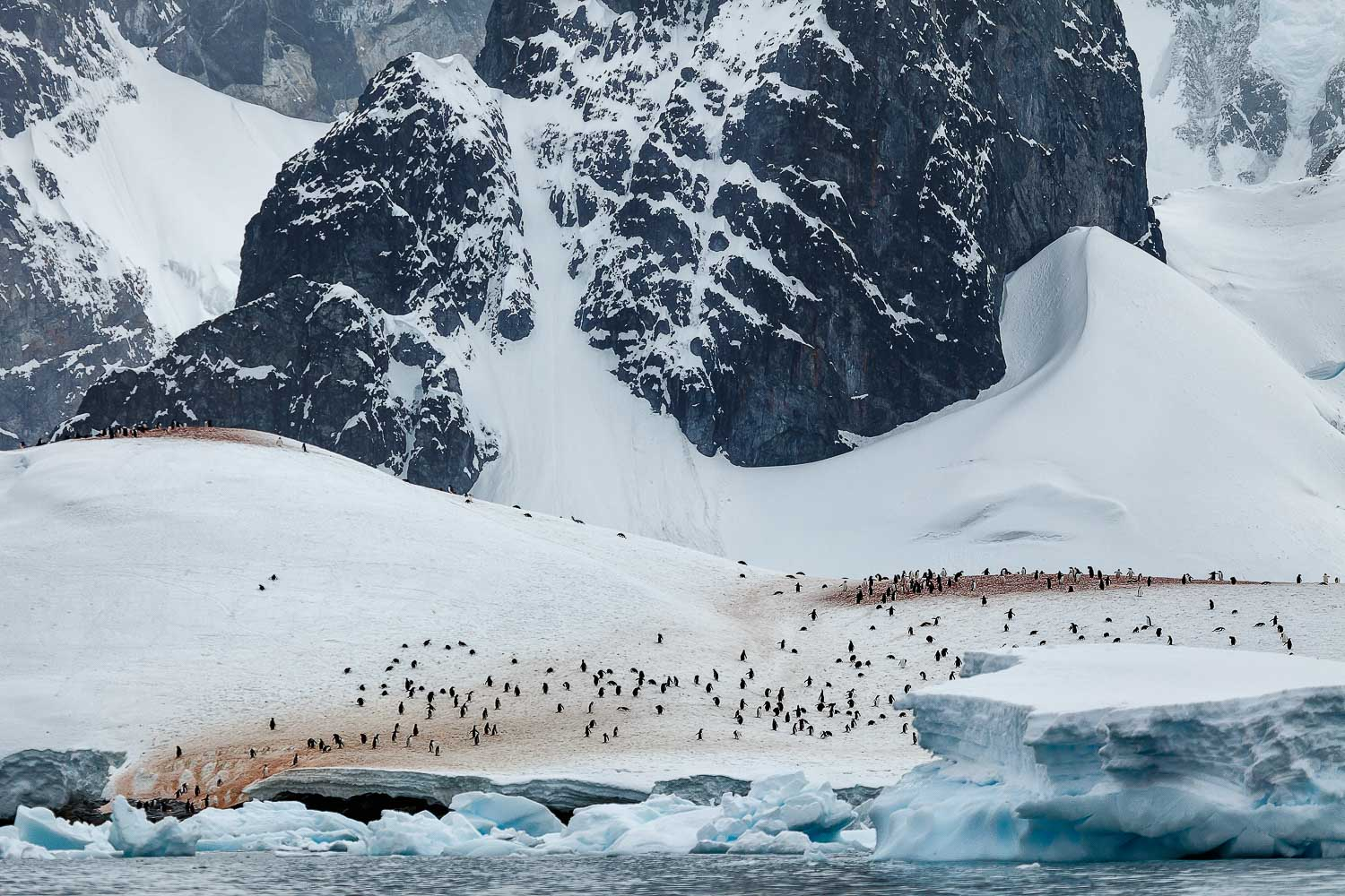 A waddle of penguins is dwarfed by the surrounding landscape on the shores of Cuverville Island off the Antarctic Peninsula.