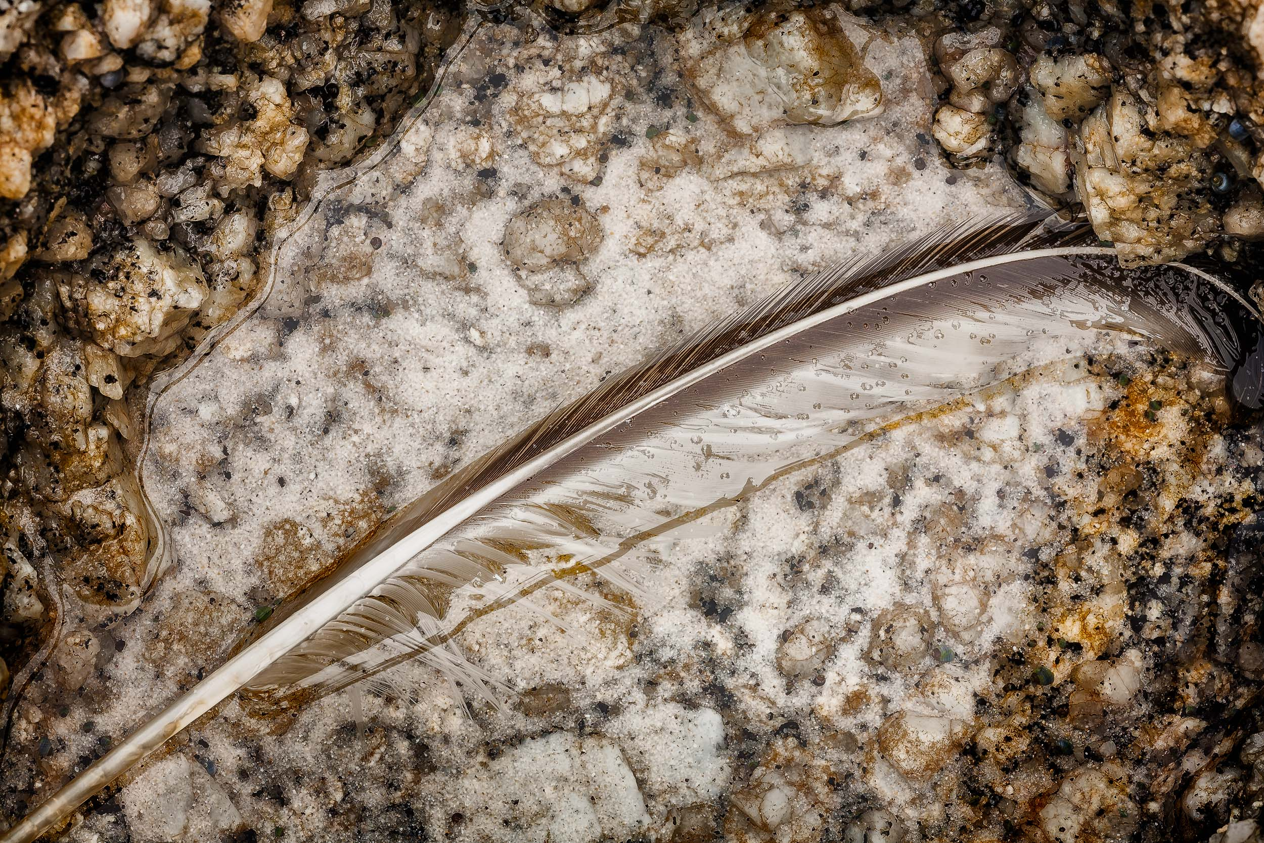 A feather, delicately positioned between rocks, lies in a shallow pool of water on  Squeaky Beach  in  Wilsons Promontory National Park, Australia .
