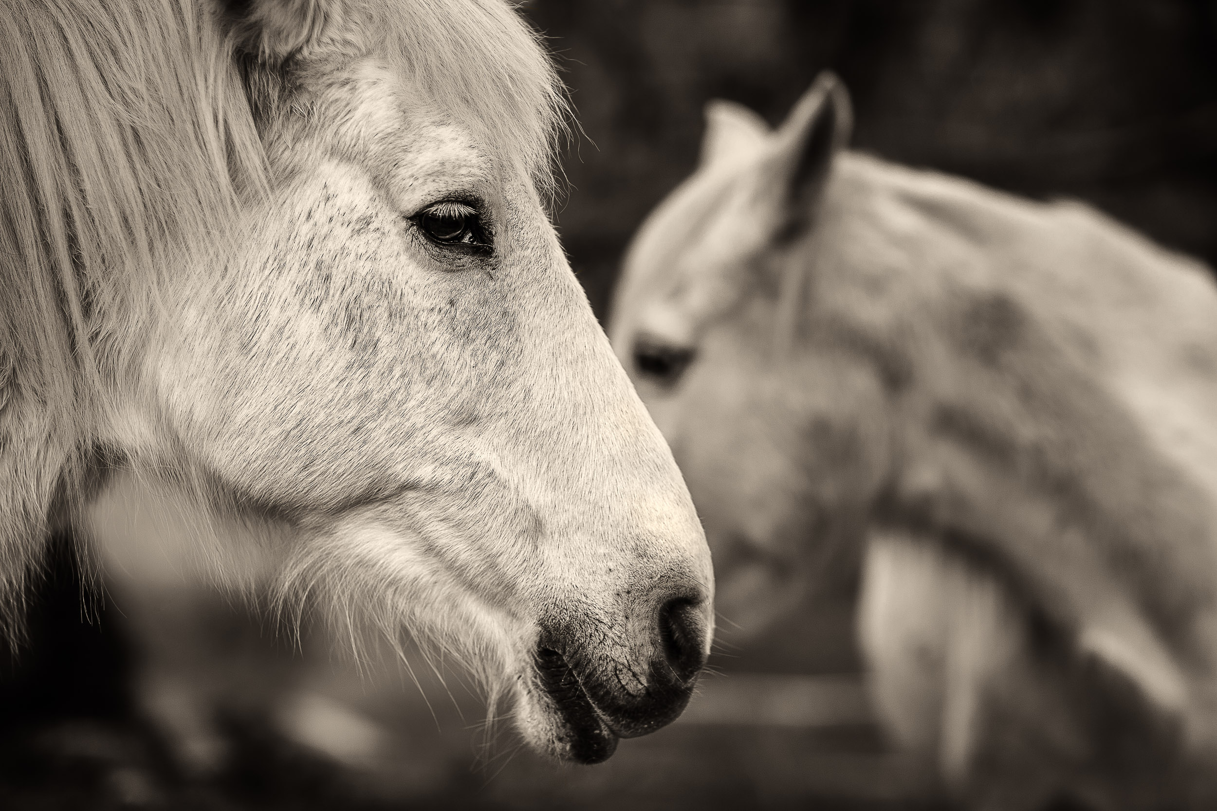 An intimate and visually compelling moment of    two horses at dusk    photographed with a short camera to subject distance.