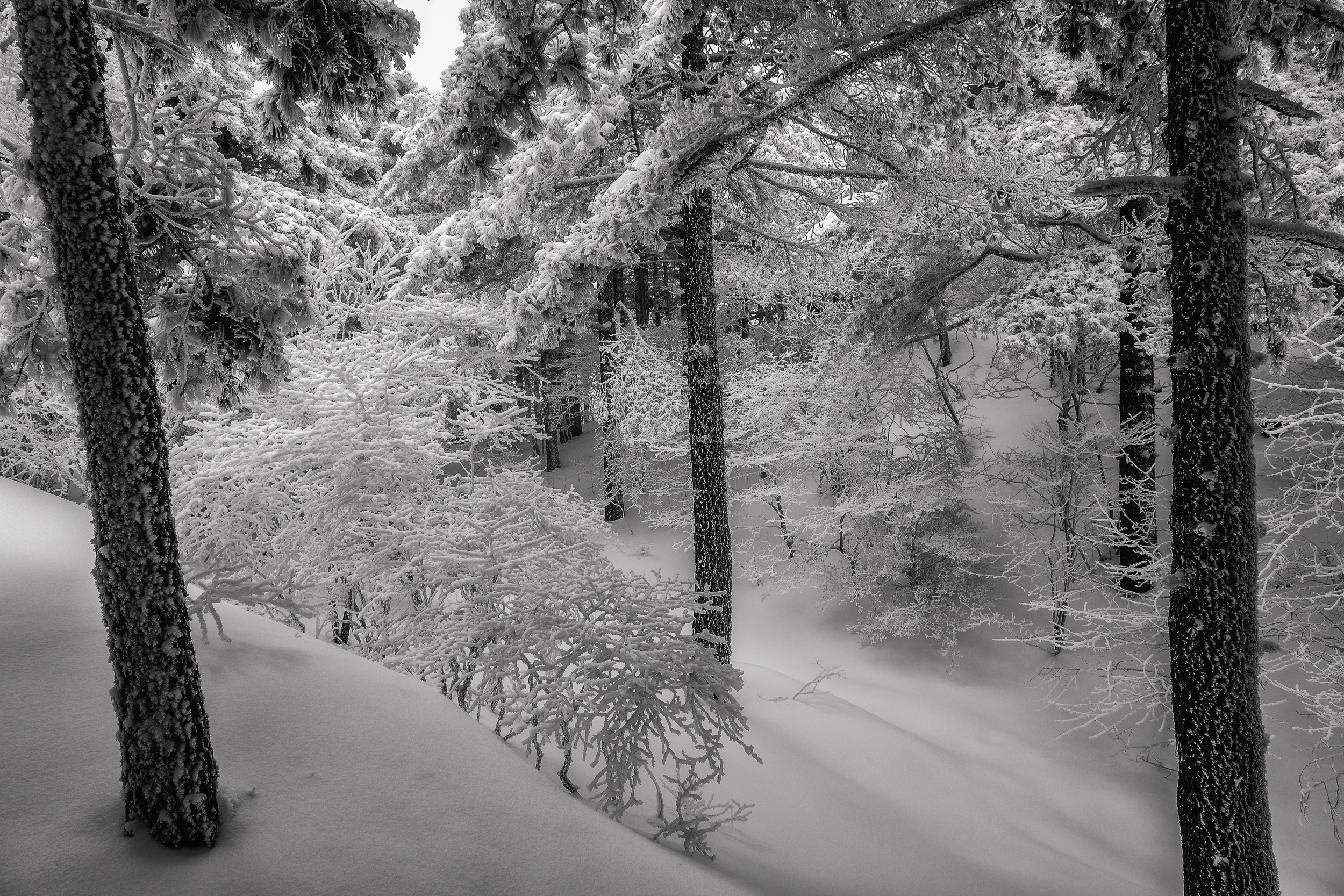 Trees in snow   , underpinned by classic composition, speak of the stillness of the moment on    Huangshan    (i.e., Yellow Mountain) in    China   .