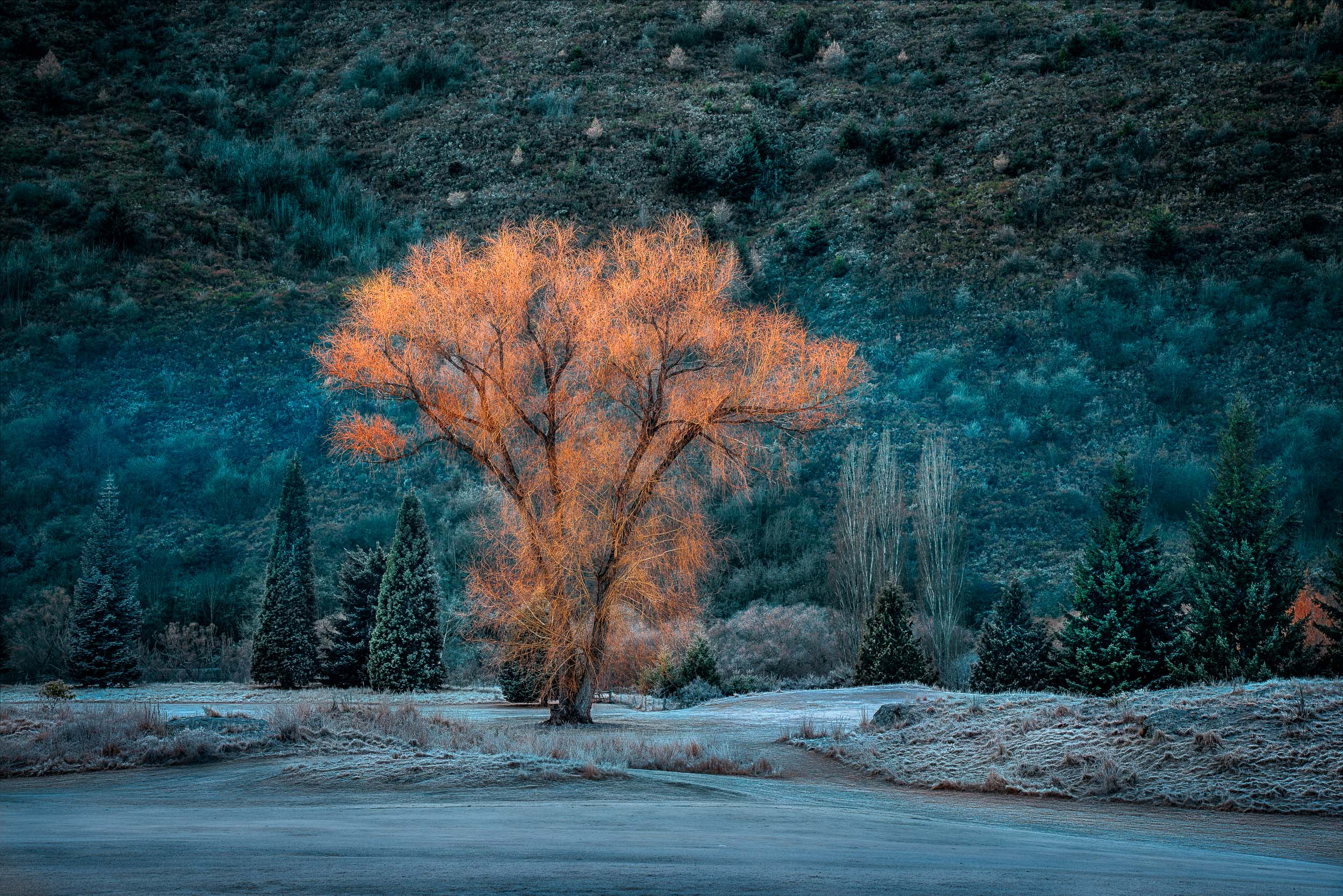 The last splash of  Autumn color  in an othewise wintery landscape near  Arrowstown  on the South Island of  New Zealand .