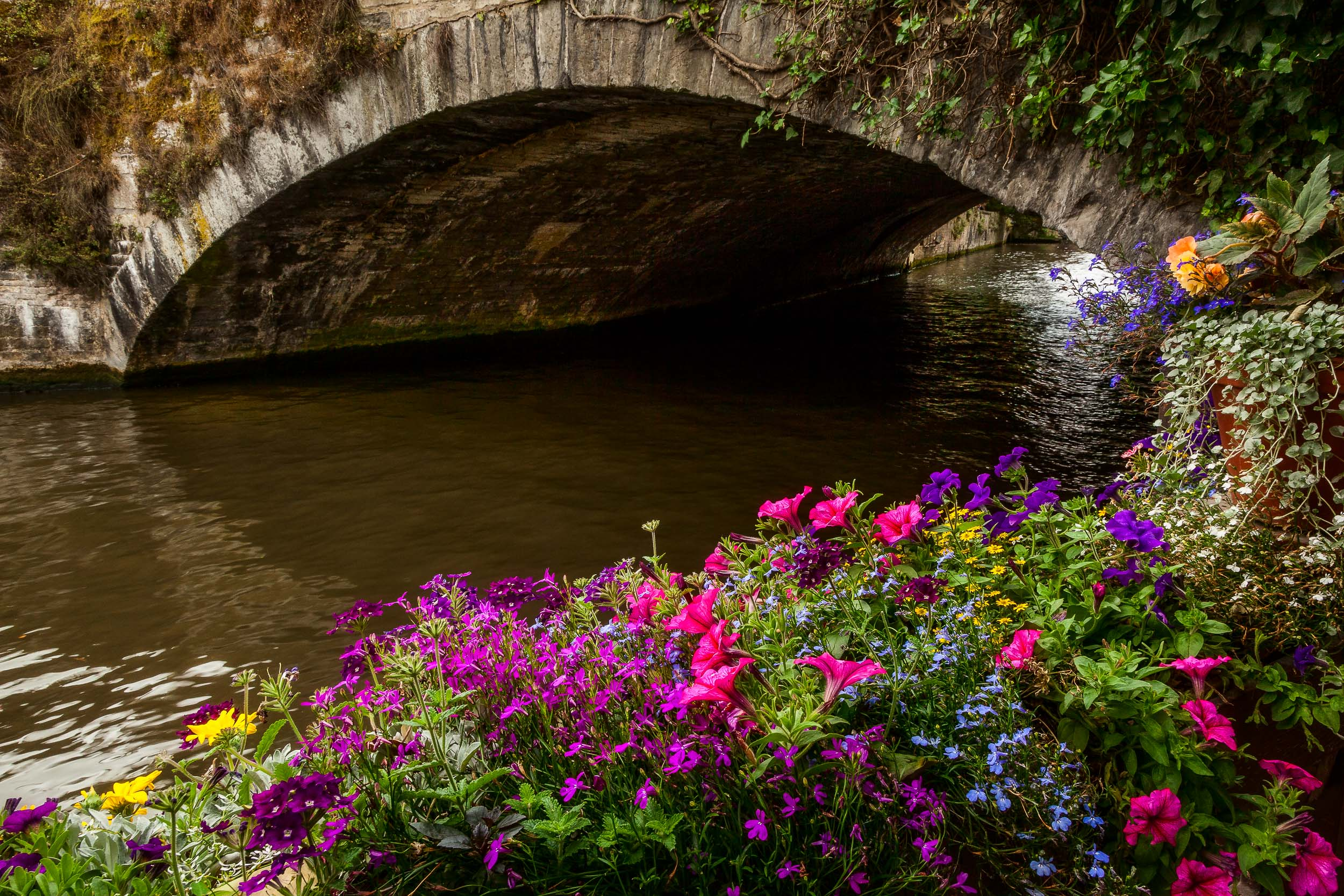 Brightly colored flowers    on a summer's day by the    canal    in    Bruges    (i.e., Brugge)    Belgium   .