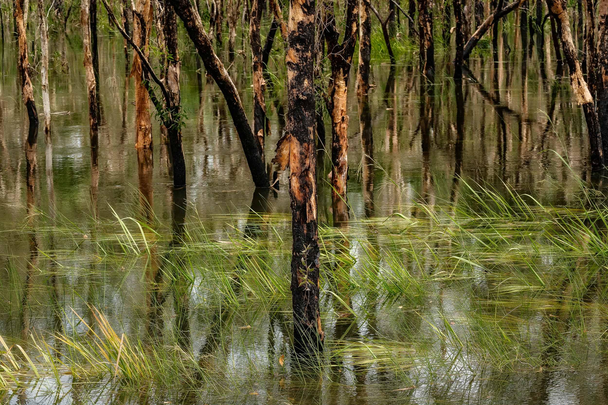 Flooded landscape  on the  Kakadu Highway  between Jabiru and Cooinda in the  Kakadu National Park, Australia .