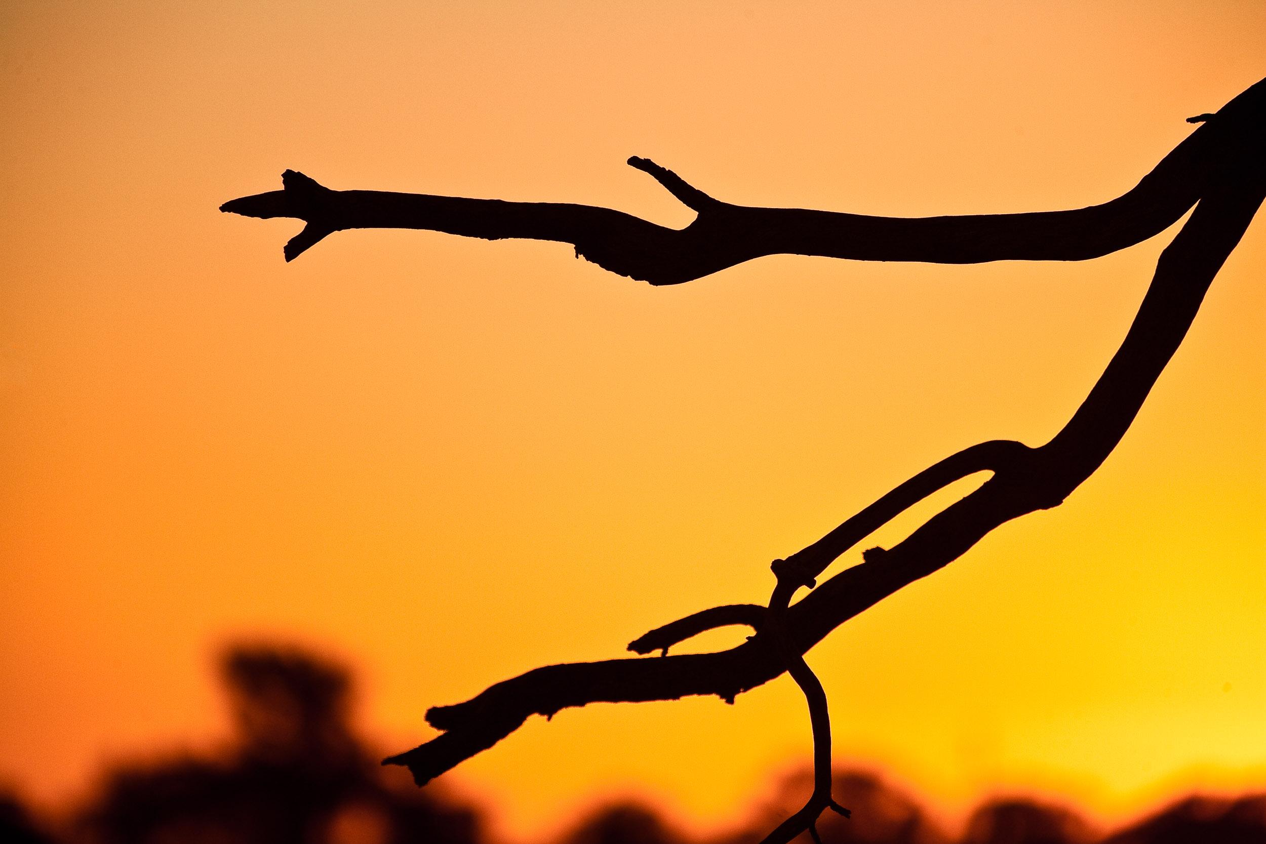 A  red hot sunset  in  Mildura, Australia .