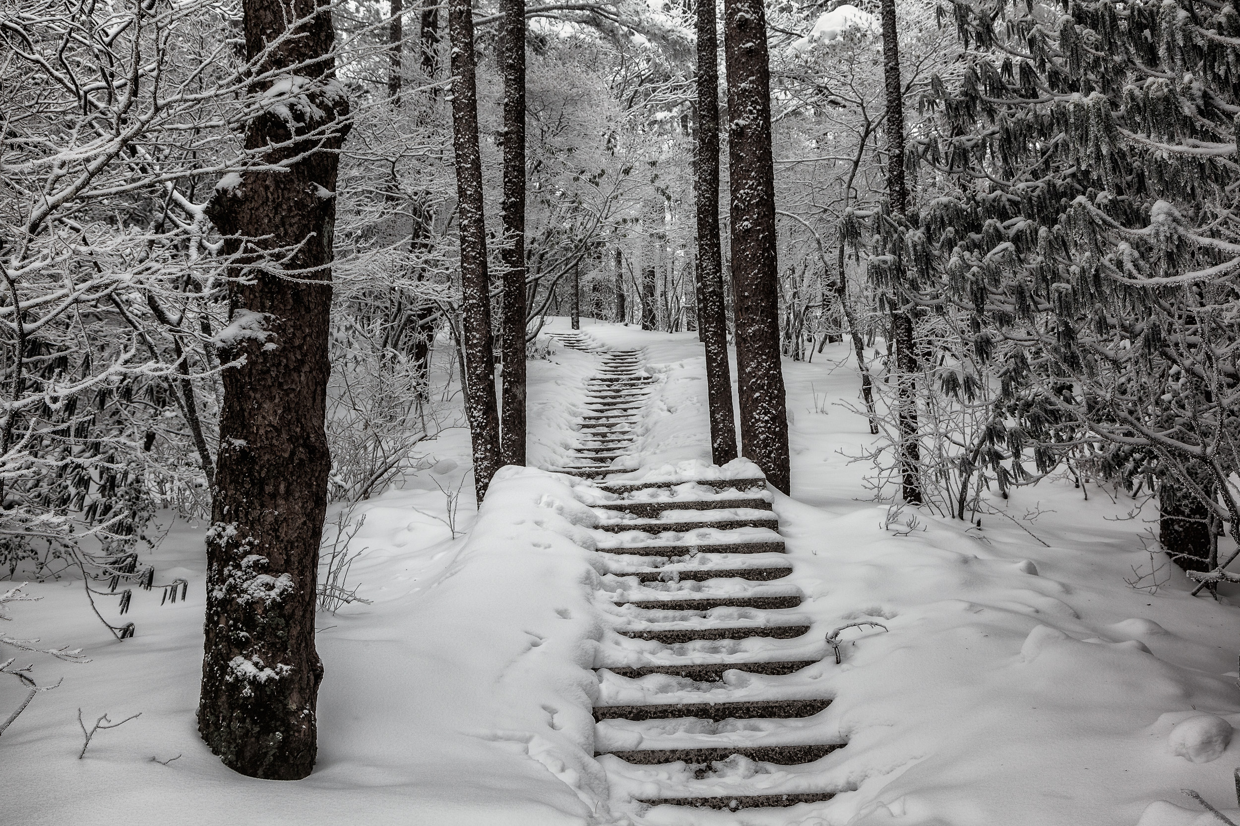 The  path , up through the snow, on  Huangshan  (i.e., Yellow Mountain) in  China .