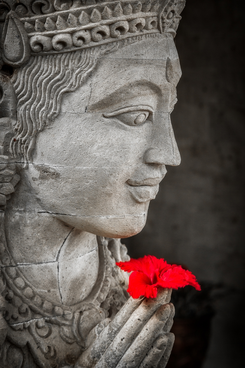 A bright    red flower    placed in the    hands of a contemplative Buddha statue    in    Bali, Indonesia   .