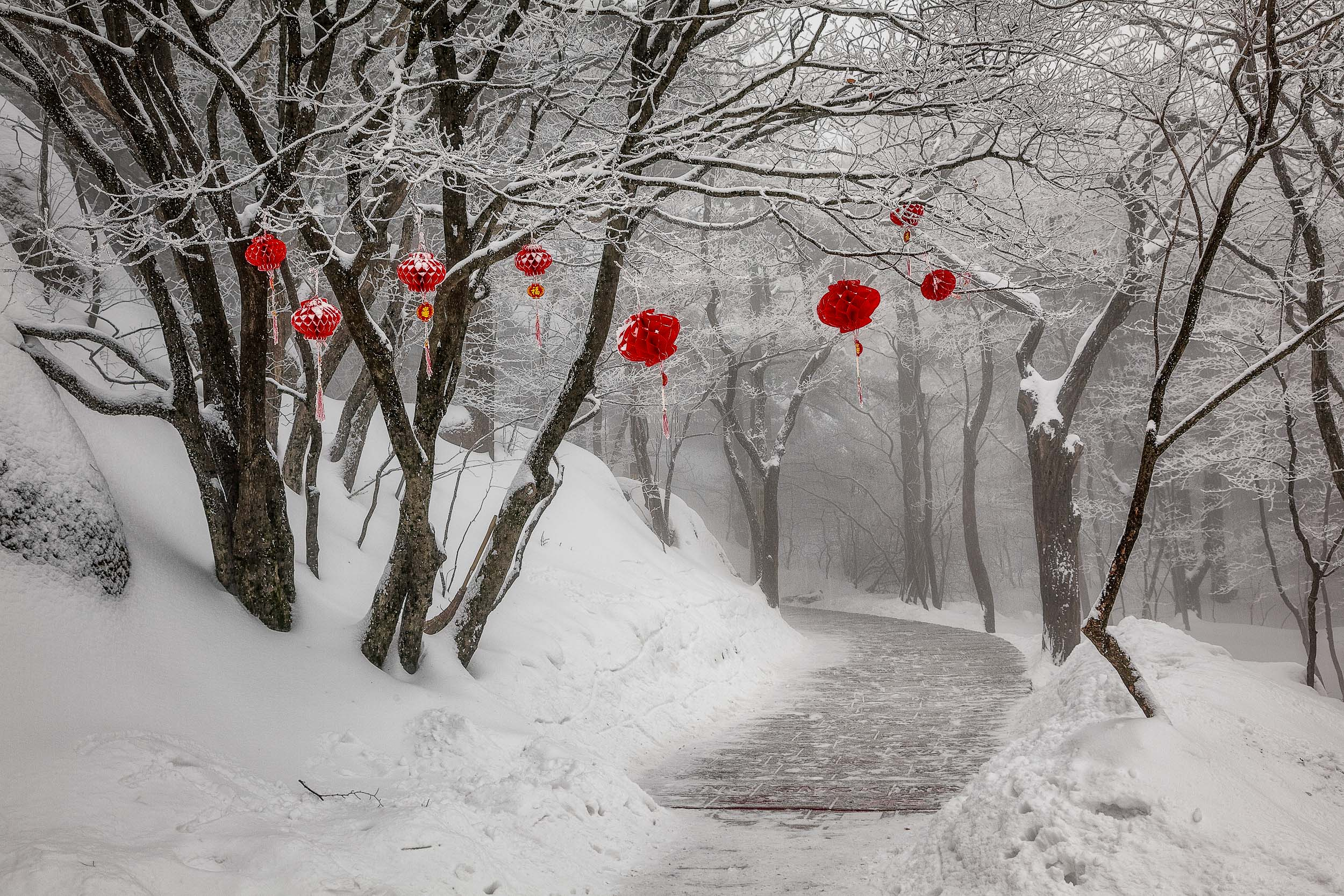 Red decorations   , in an otherwise monochromatic landscape, greet the tired, cold walker on    Huangshan    (i.e., Yellow Mountain)    in China   .
