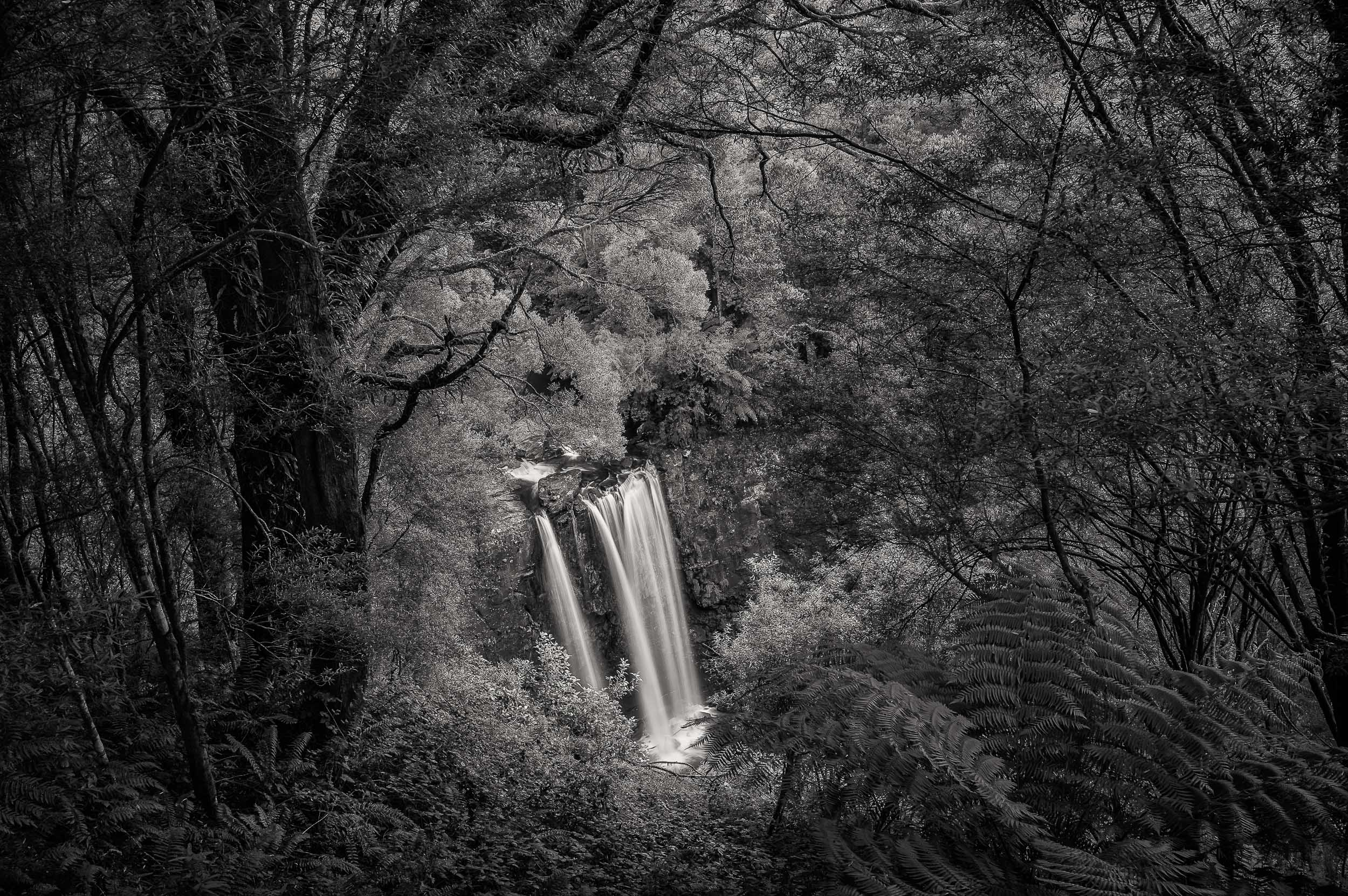 Lookout, Erskine Falls, Great Otway National Park